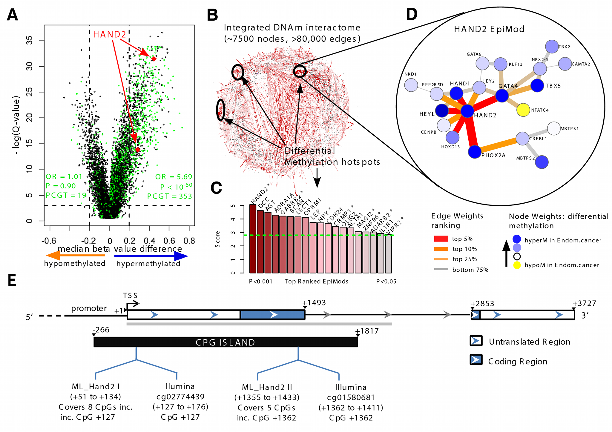 Discovery of <i>HAND2</i> methylation as a core feature in endometrial cancer.