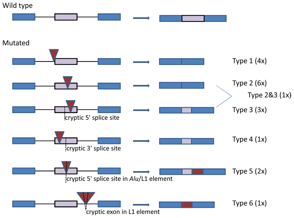 The Gene Contains Hotspots for L1 Endonuclease-Dependent Insertion