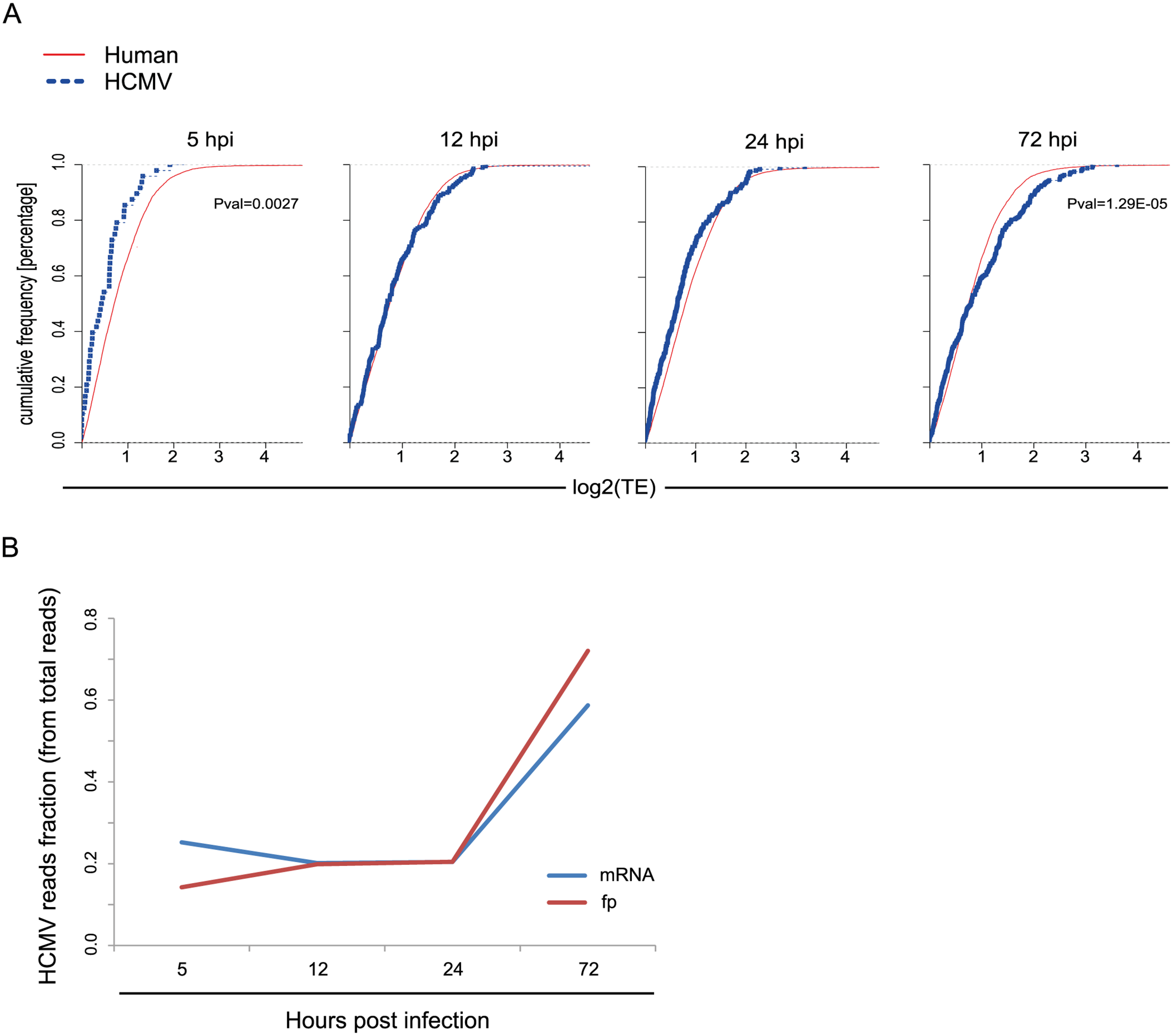 Differences in translation efficiency between viral and human genes along HCMV infection.