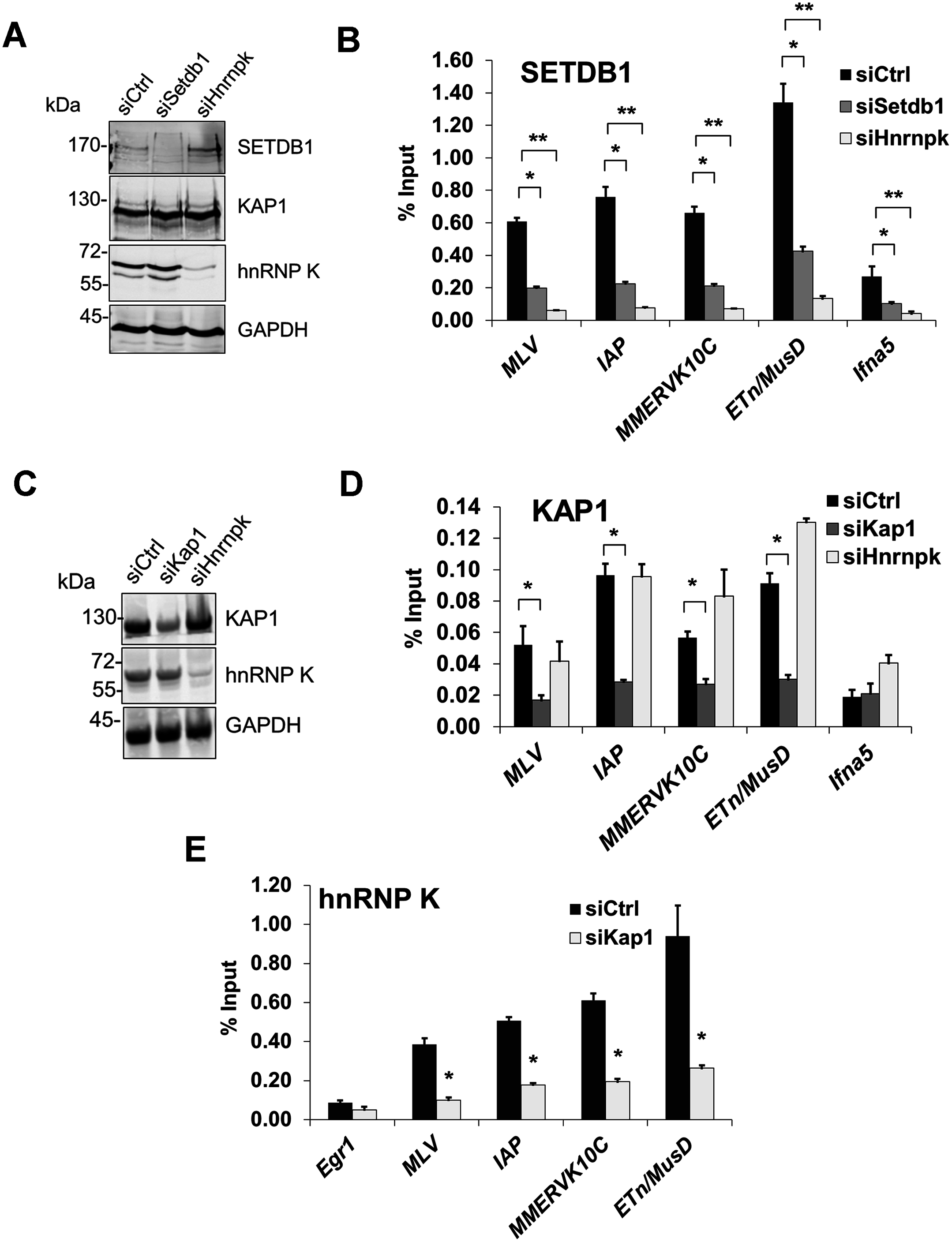 hnRNP K is required for SETDB1 but not KAP1 recruitment to ERVs.
