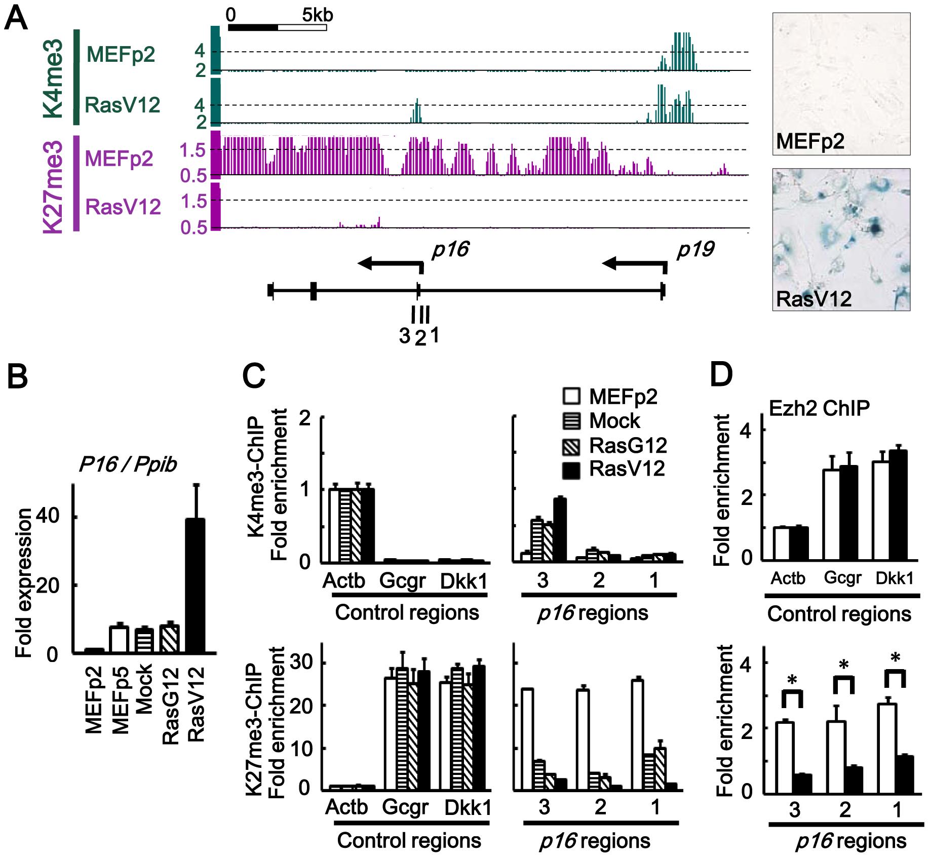 Epigenomic alteration of <i>Ink4a</i>-<i>Arf</i> locus.