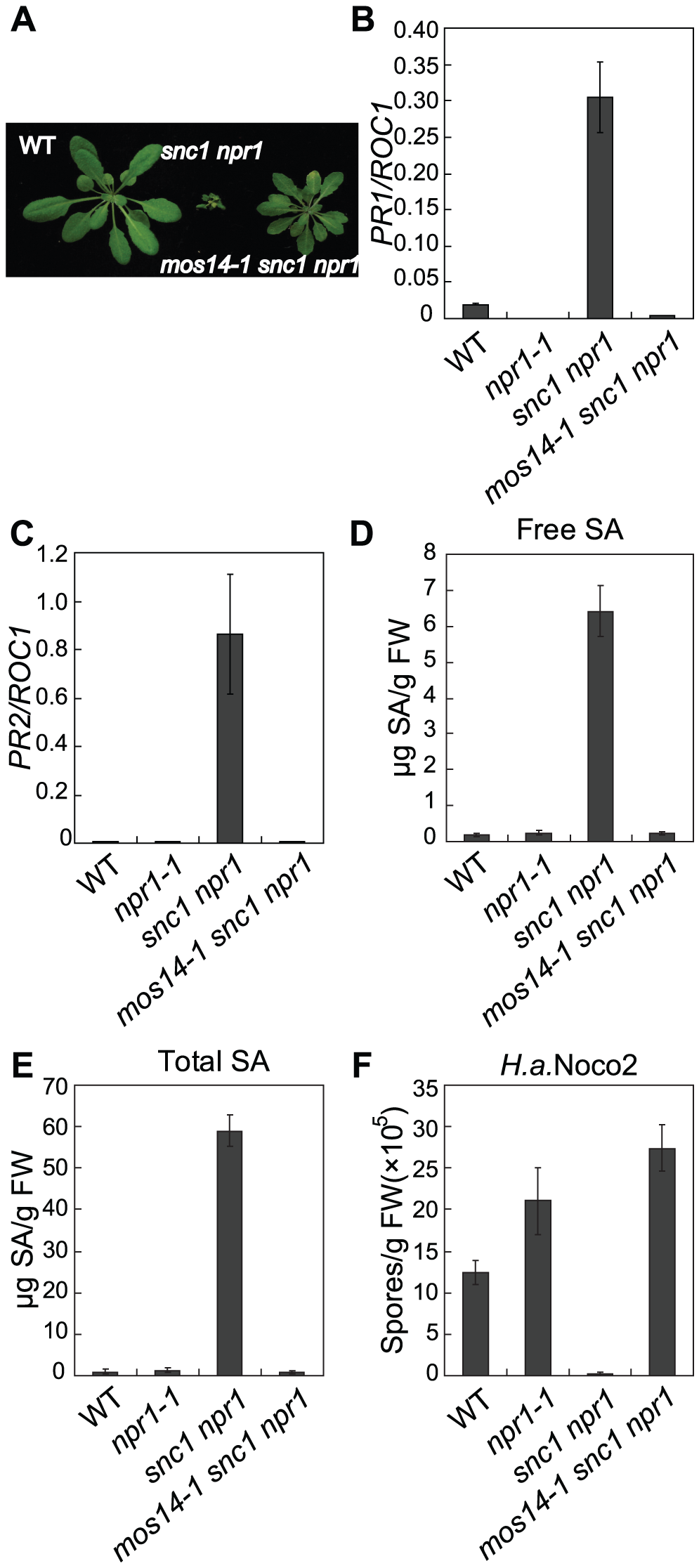 Constitutive immune responses in <i>snc1</i> are suppressed by <i>mos14-1</i>.