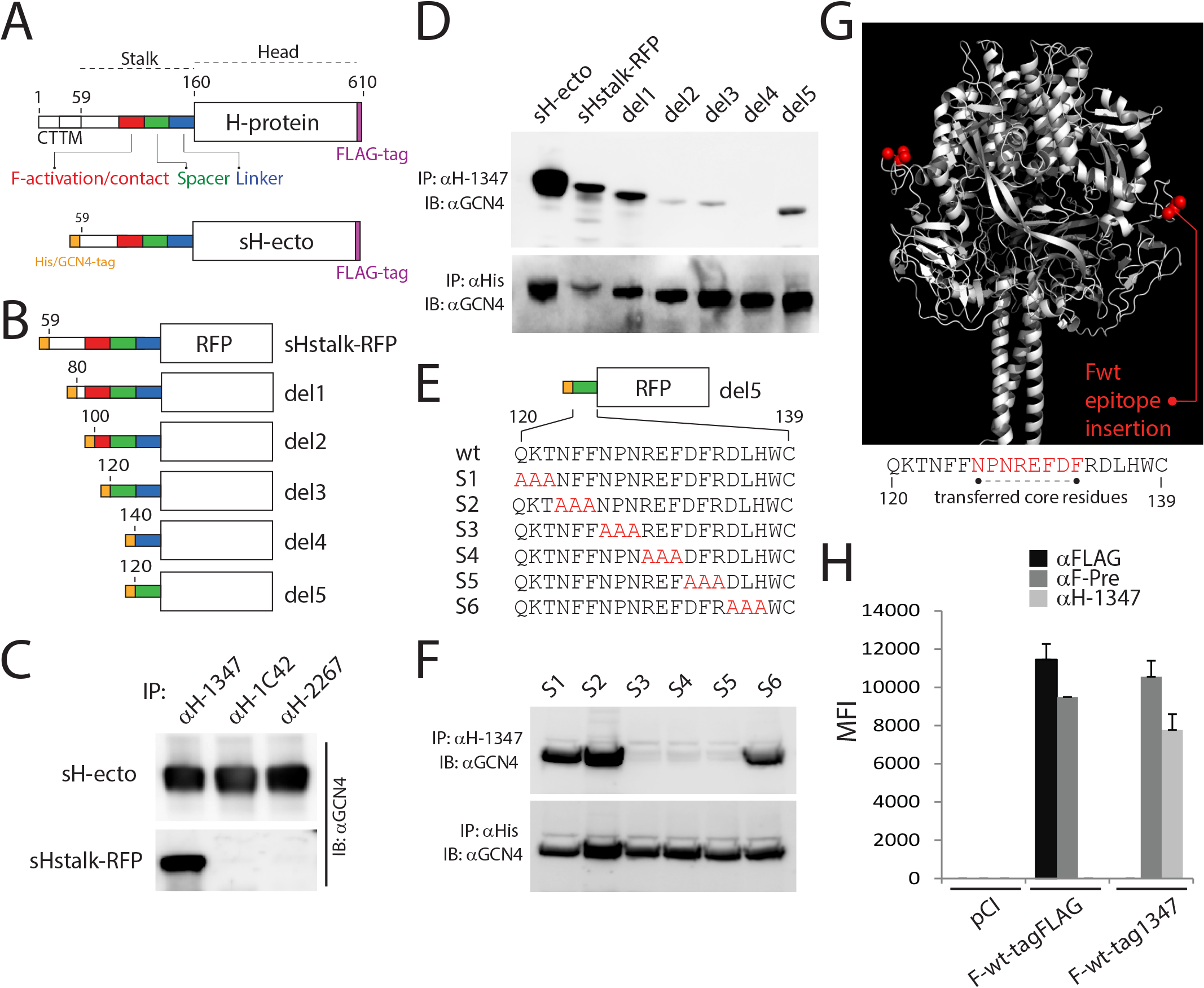 mAb αH-1347 epitope mapping.