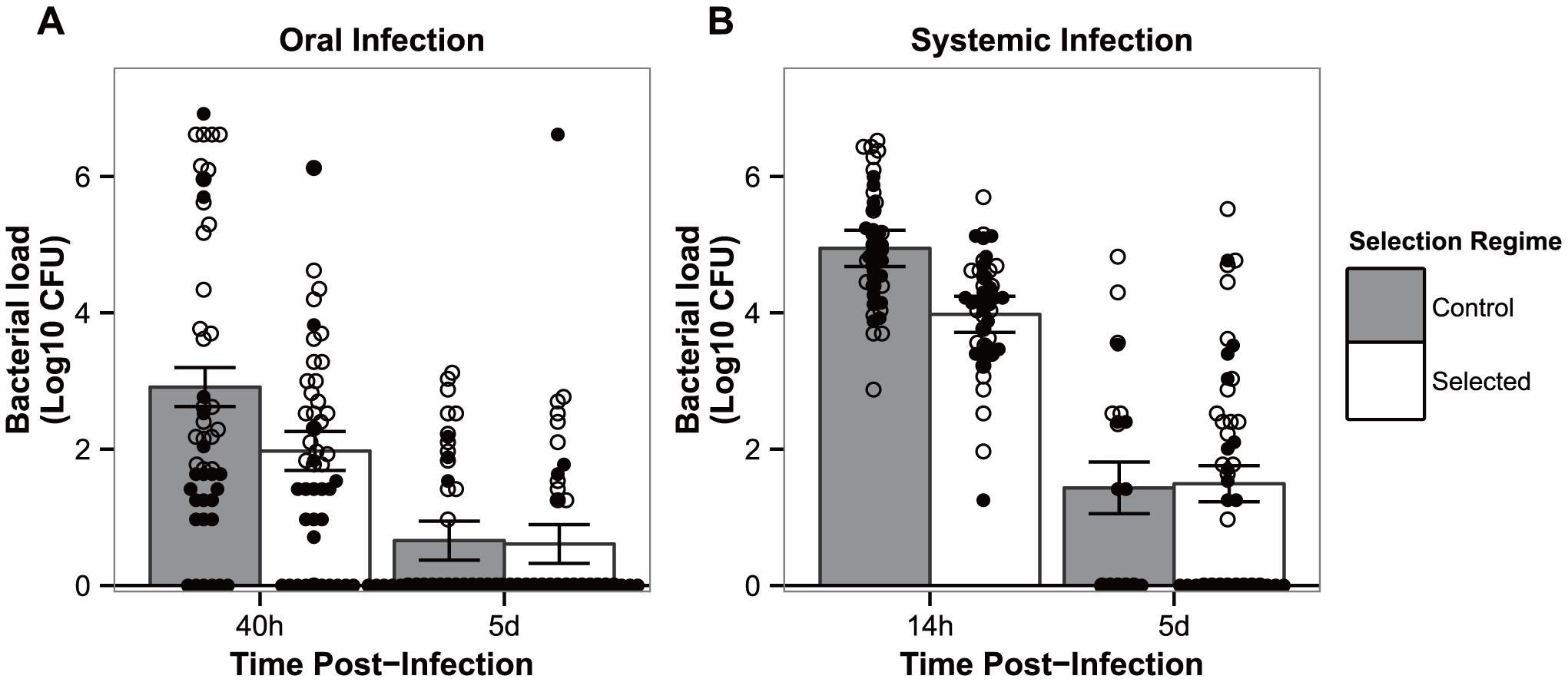 Flies have evolved resistance against <i>P. entomophila</i> infection.