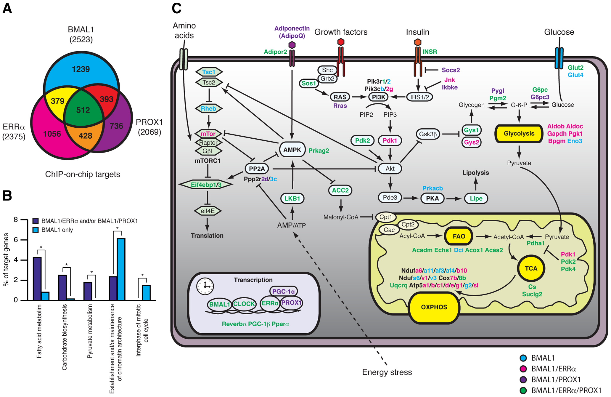 ERRα, PROX1, and BMAL1 genomic convergence linking the clock with metabolism.