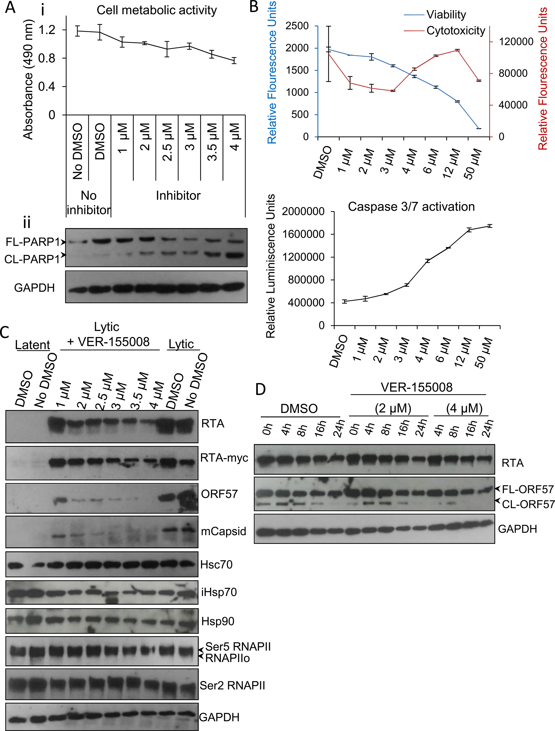 VER-155008 abrogated viral protein synthesis pre-translationally in TREx BCBL1-RTA cells.