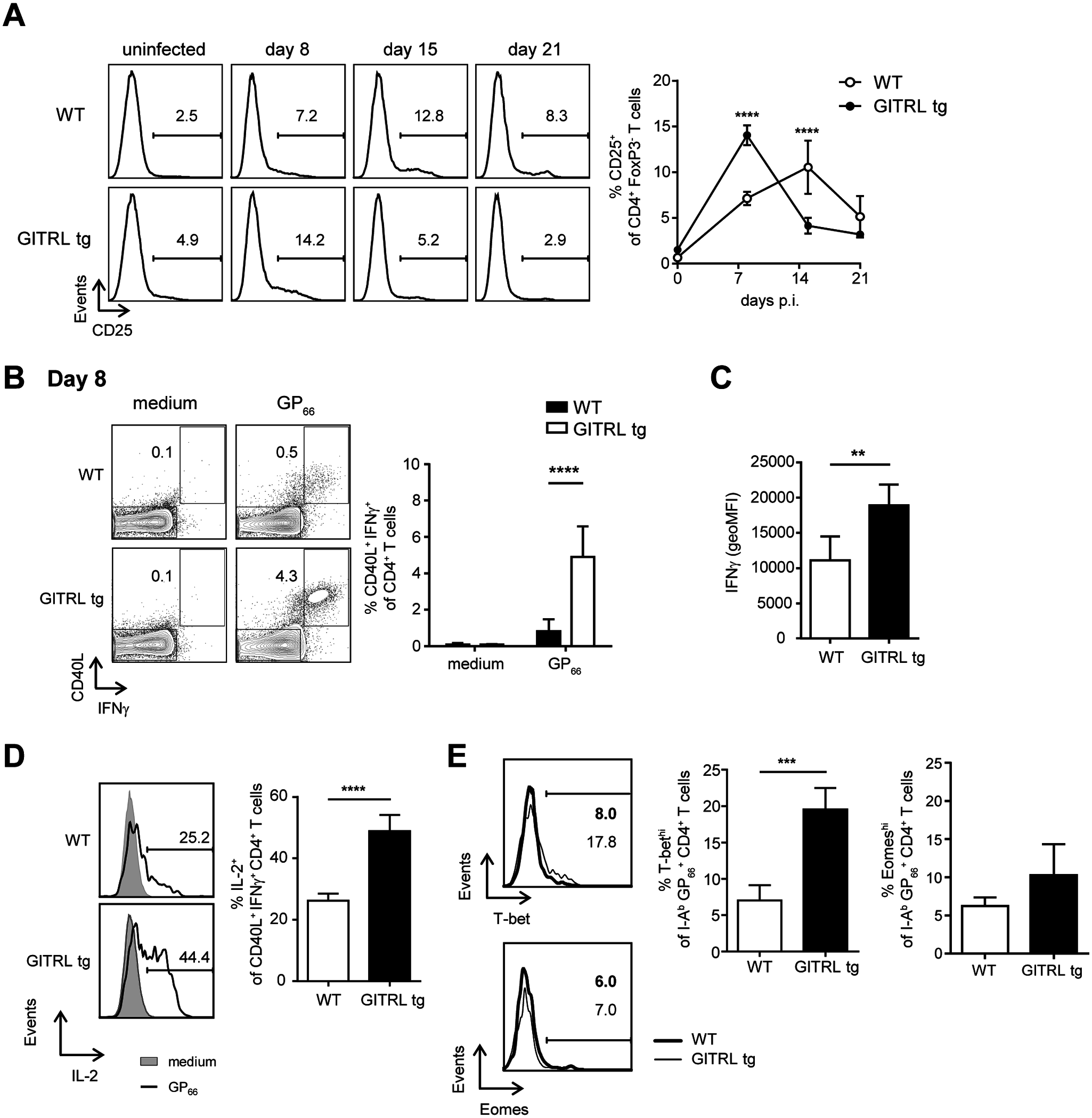 CD4<sup>+</sup> T cells from GITRL tg mice are activated earlier and are more polyfunctional during chronic LCMV infection.