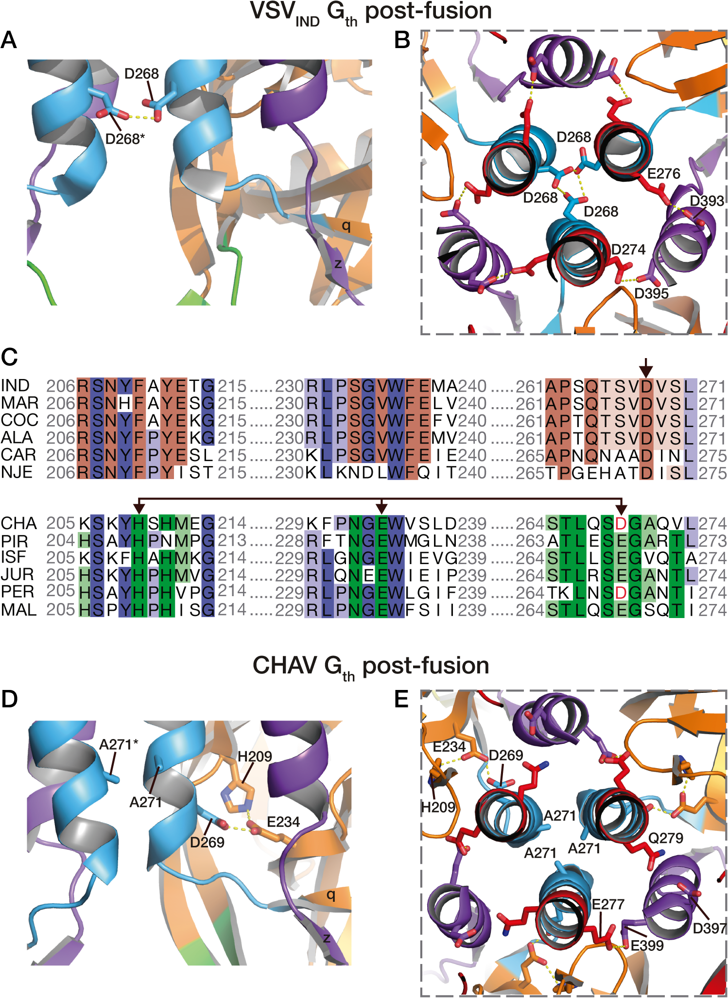 pH sensitive molecular switches in the post-fusion structures of VSV-G<sub>th</sub> and CHAV-G<sub>th</sub>.