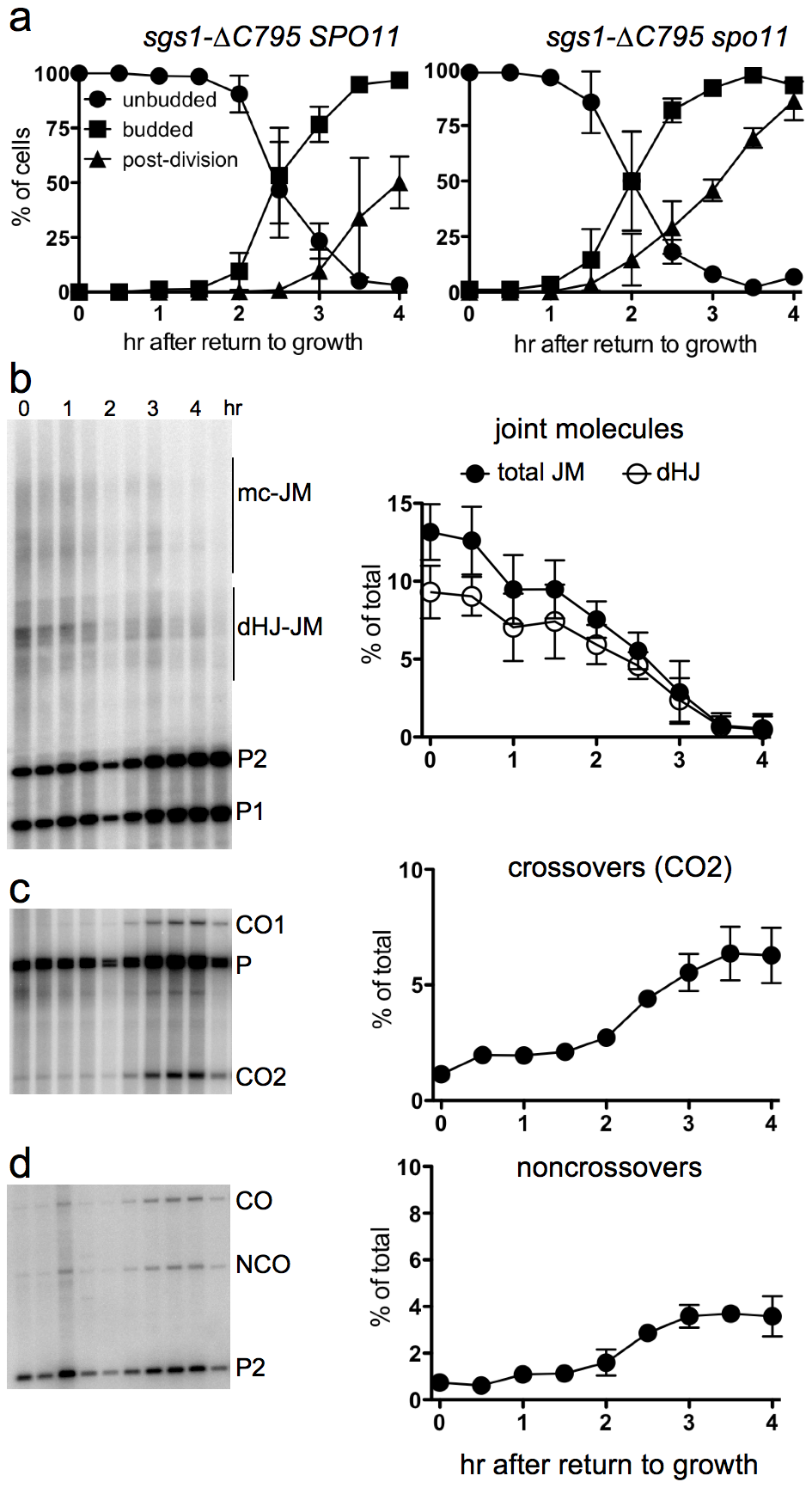 Delayed JM resolution and increased CO formation after RTG in the absence of the Sgs1 helicase.