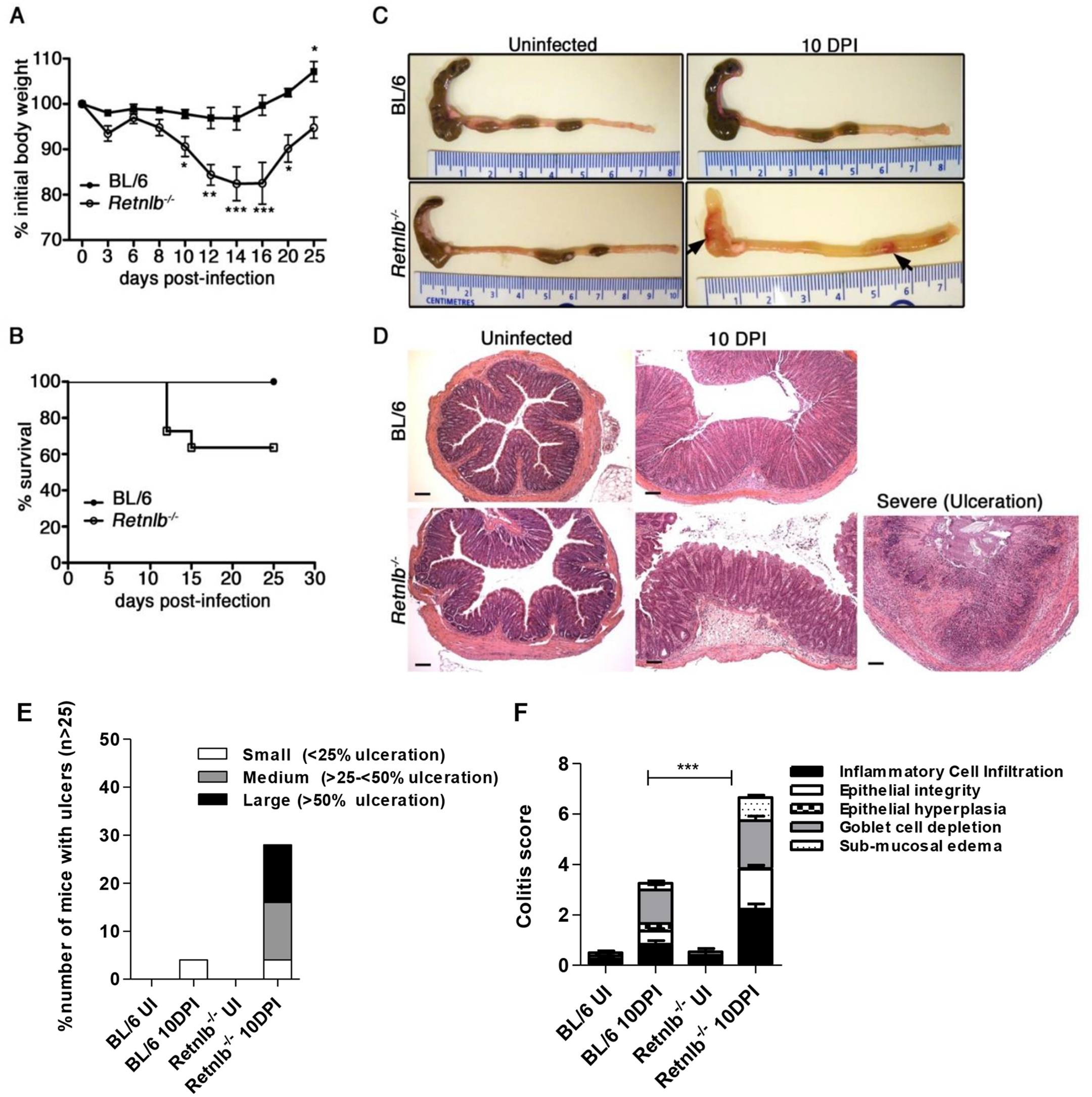 <i>Retnlb</i><sup><i>-/-</i></sup> mice are highly susceptible to <i>C</i>. <i>rodentium</i>-induced colitis.
