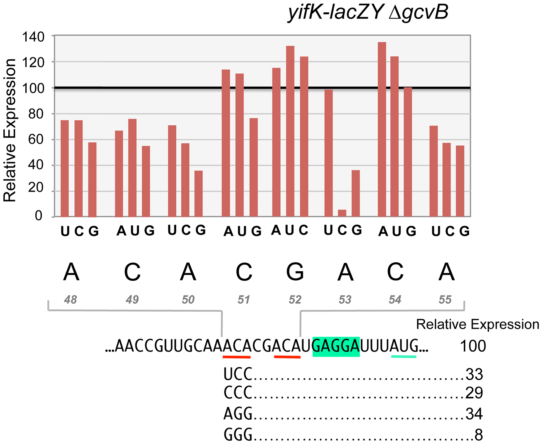 Mutational analysis of the enhancer element.
