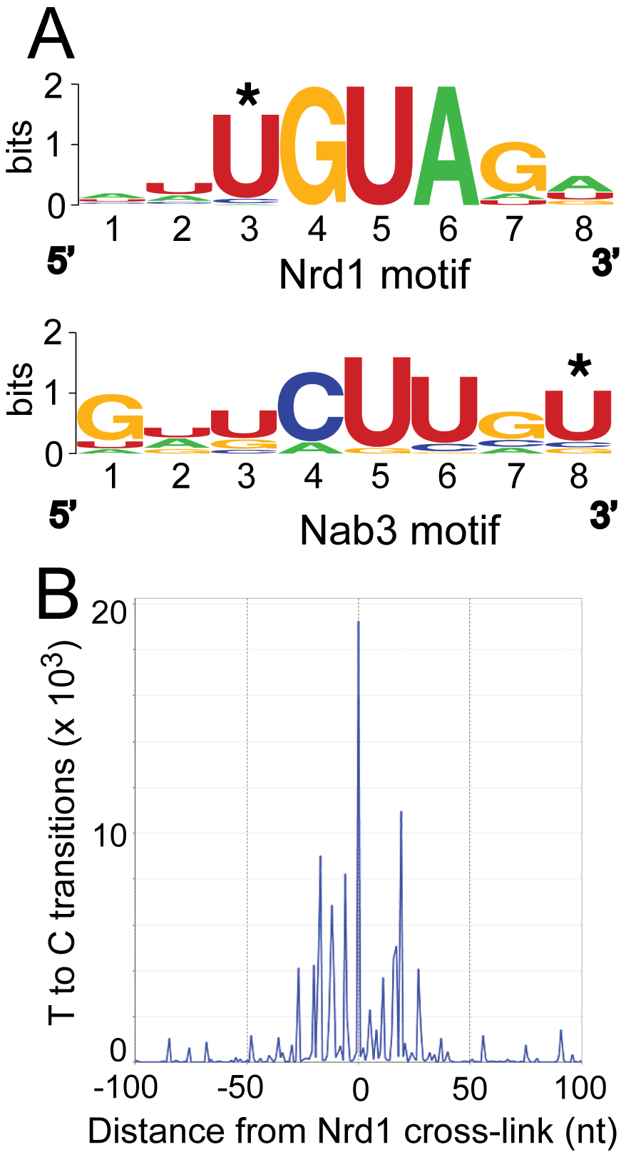Conserved Nrd1 and Nab3 binding motifs.
