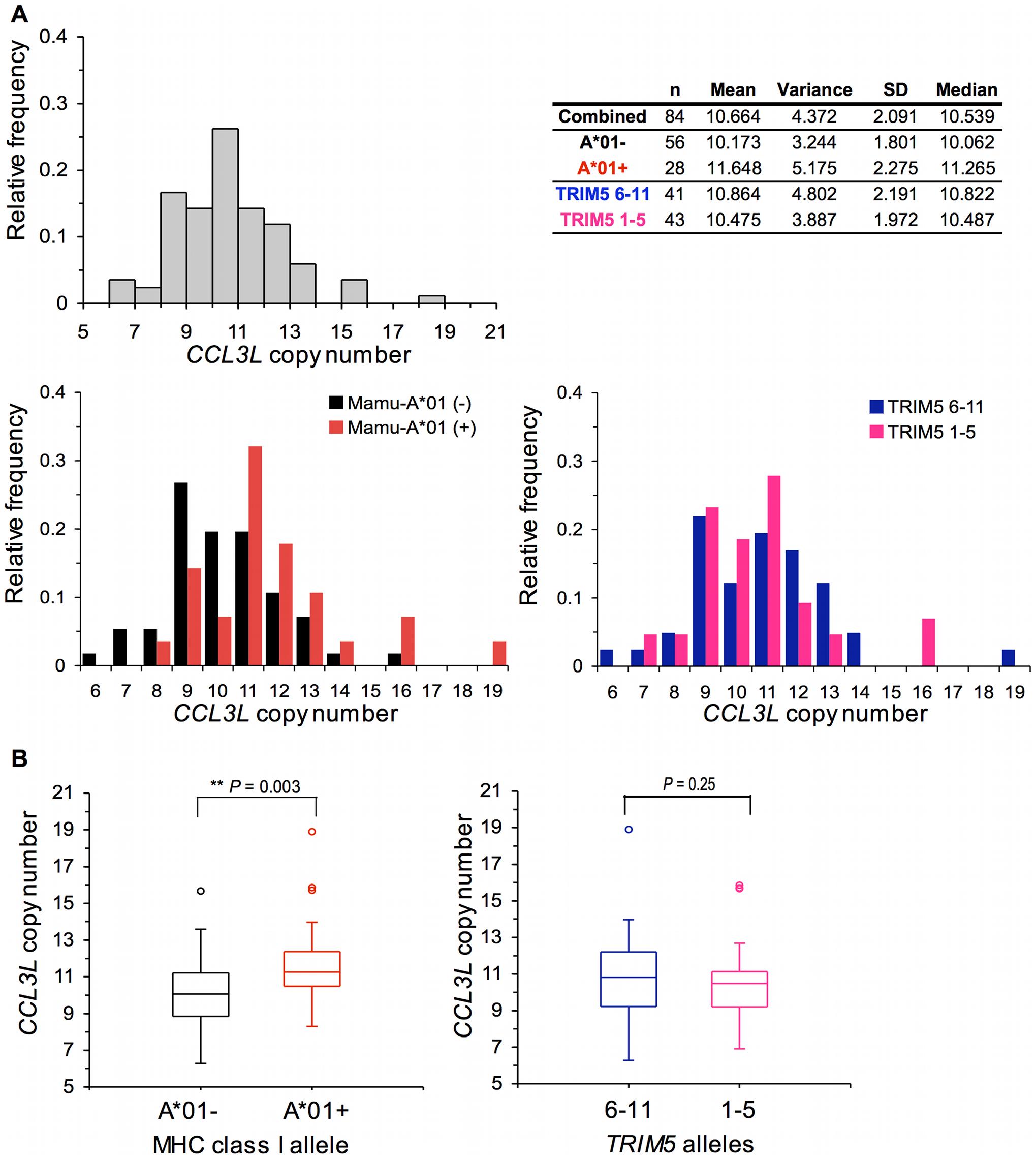 Distribution of <i>CCL3L</i> copy number in Indian-origin rhesus monkeys.