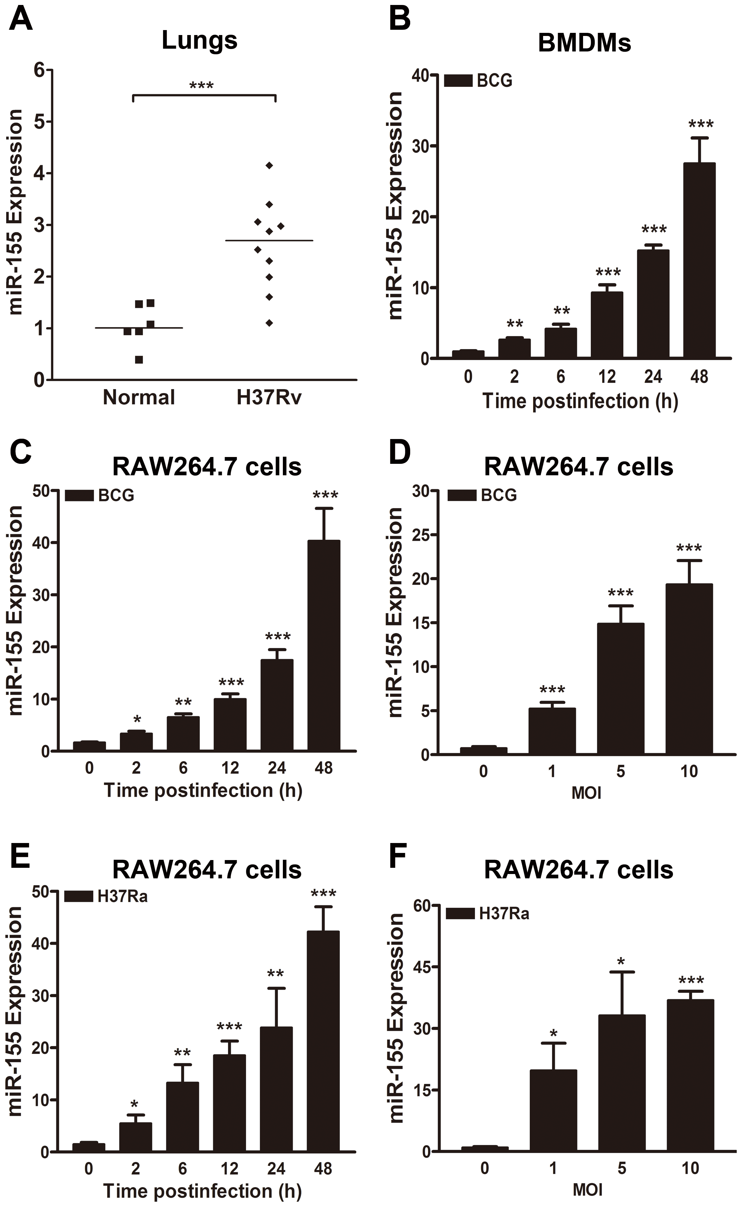 miR-155 expression is induced after mycobacterial infection.