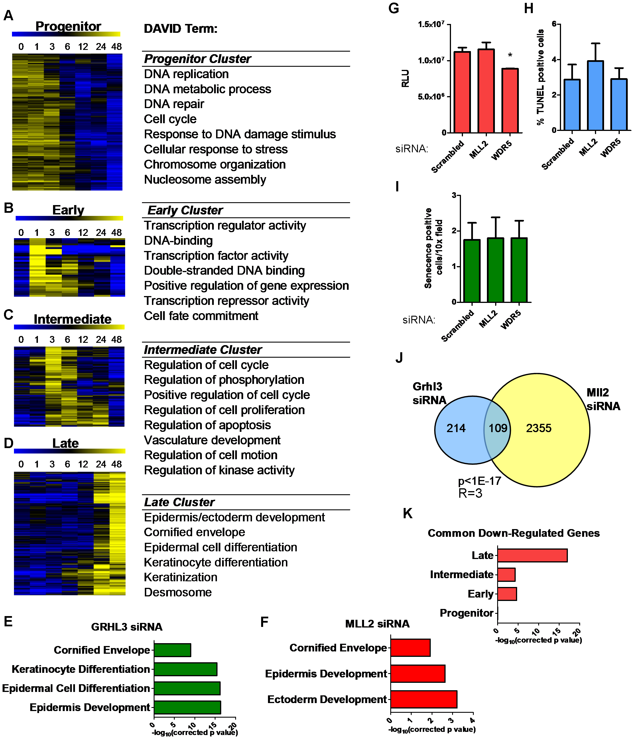 Loss of GRHL3 and MLL2 affects epidermal differentiation genes as defined by expression profiling during keratinocyte differentiation.