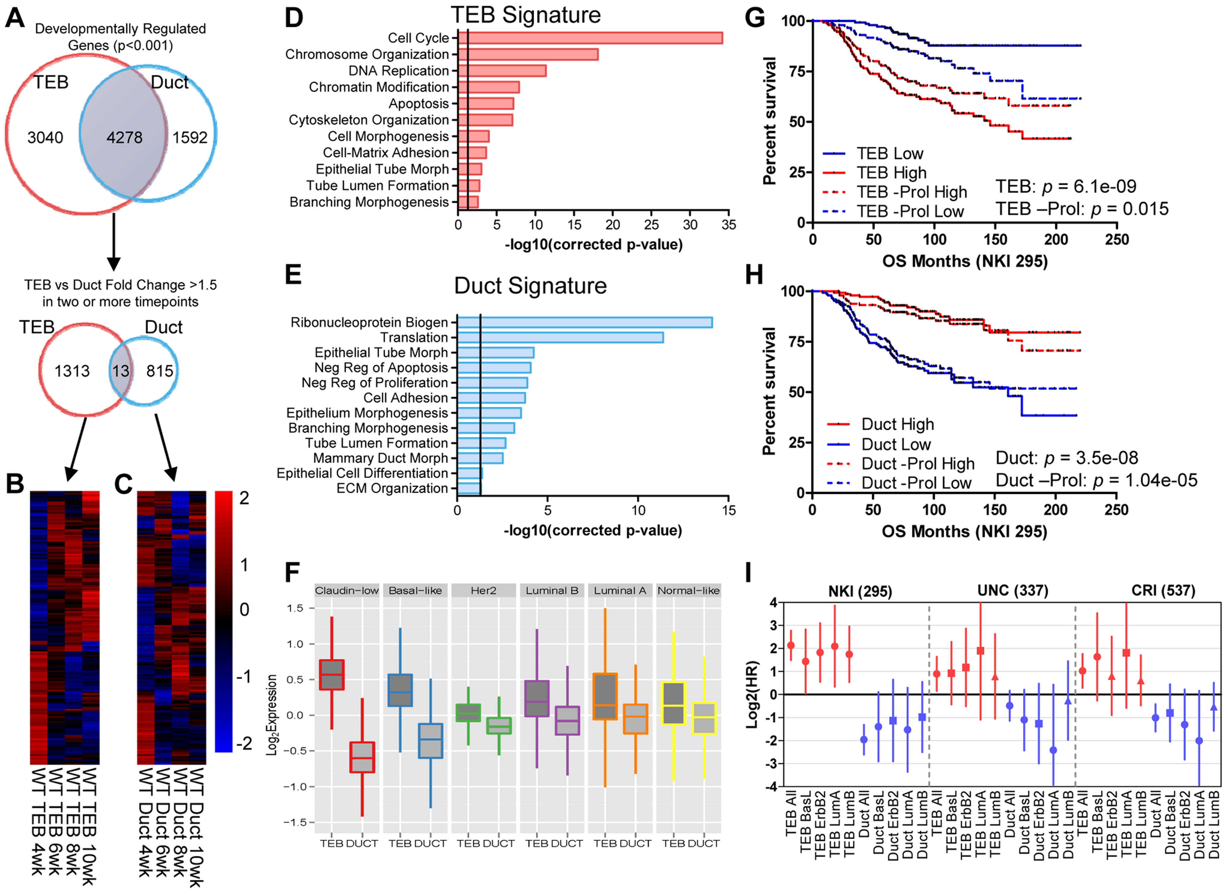 Developmental TEB and duct gene signatures derived from time course expression profiling predict breast cancer prognosis.
