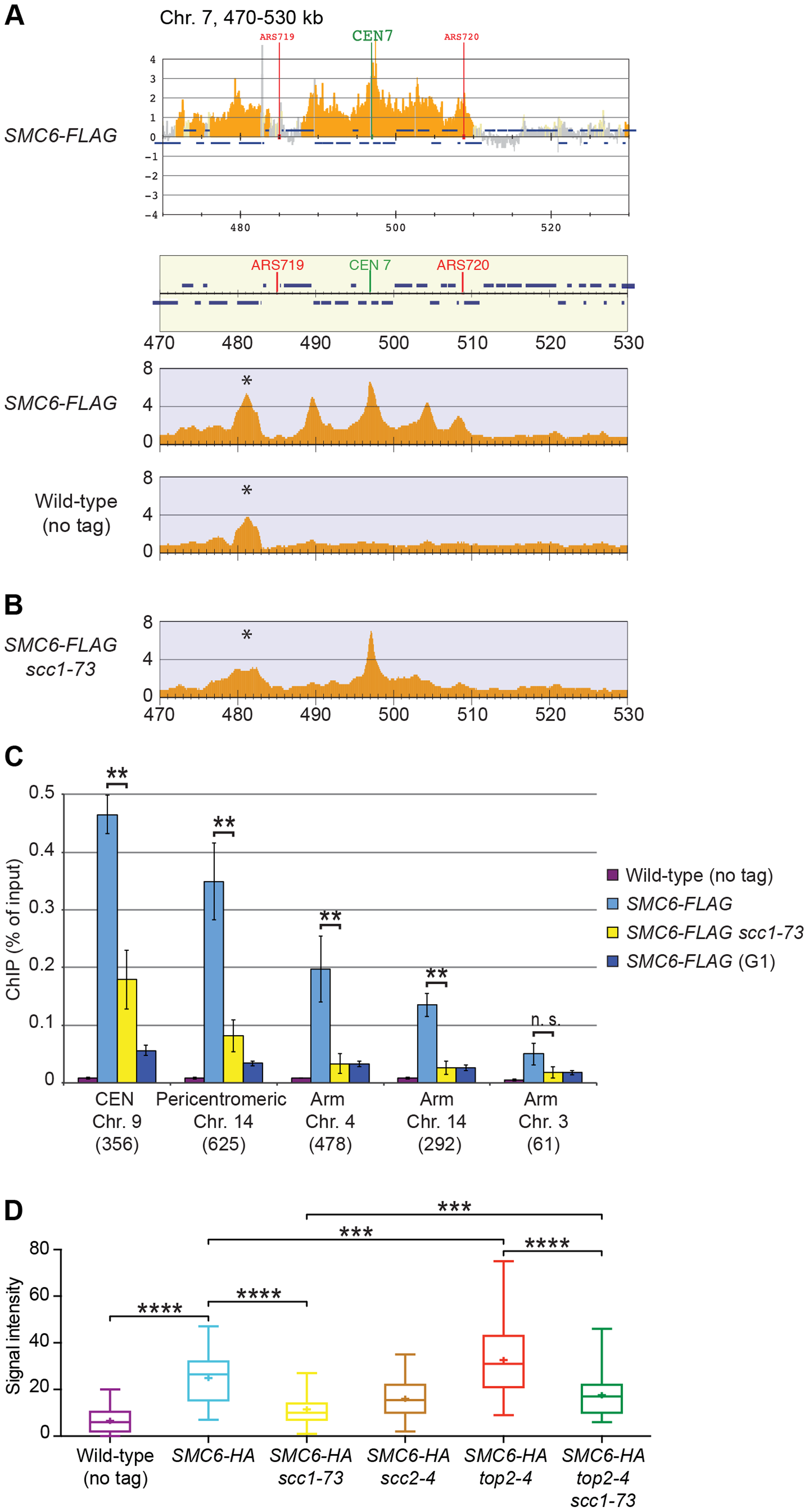 The chromosomal association of Smc6 depends on cohesin.