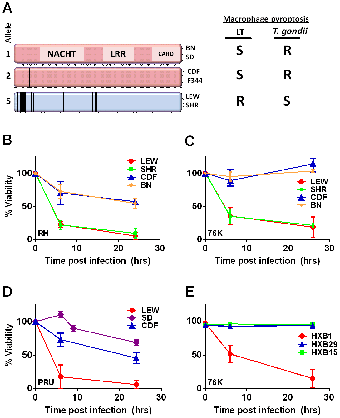 NLRP1 sequence in inbred and RI rats correlates with rapid macrophage death.