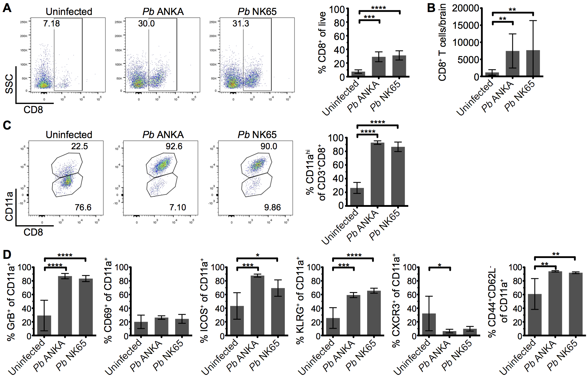 Parasite specific CD8<sup>+</sup> T cells are comparably activated within the brains of mice infected with <i>Pb</i> ANKA and <i>Pb</i> NK65 parasites.