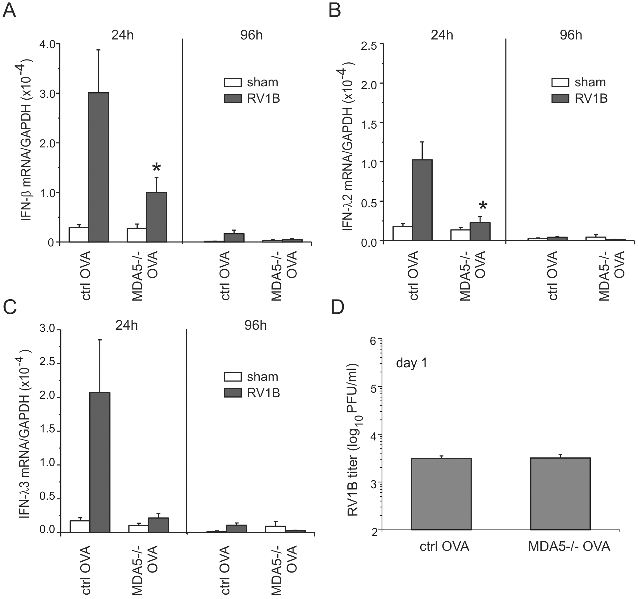 RV1B-induced IFN responses and viral titer in OVA-treated MDA5−/− mice.