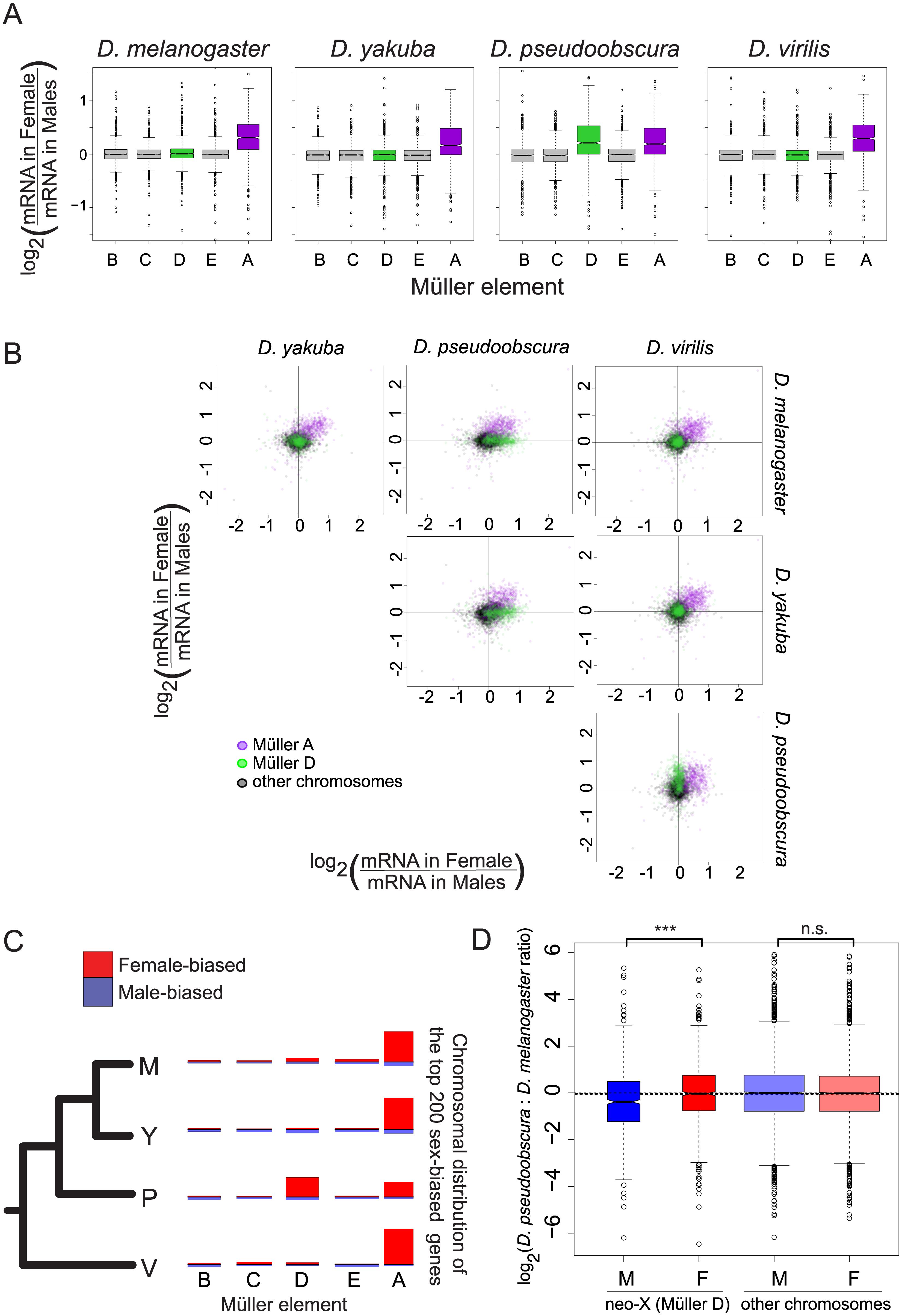 Gene expression on the neo-X (Müller D element) in <i>D</i>. <i>pseudoobscura</i> does not show complete dosage compensation.