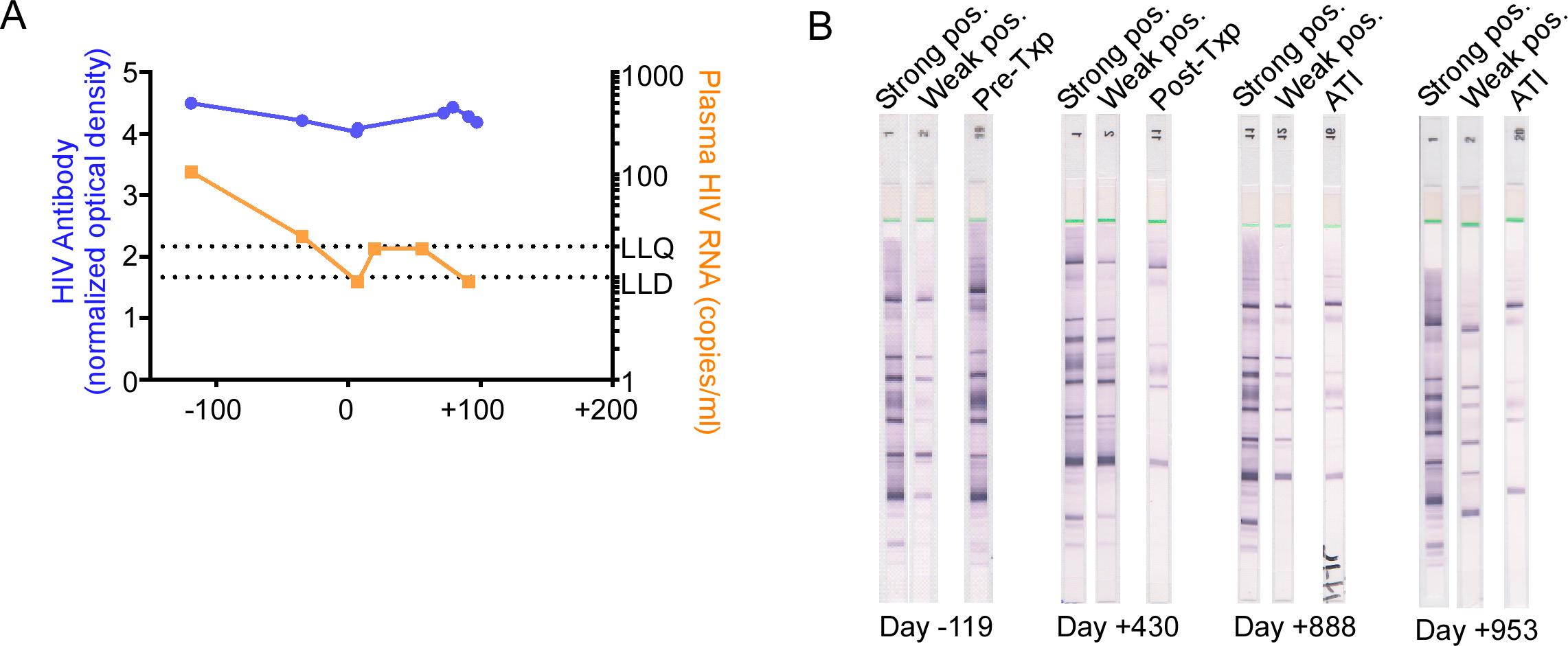 HIV-1 antibody assessment in the peri-transplant period.
