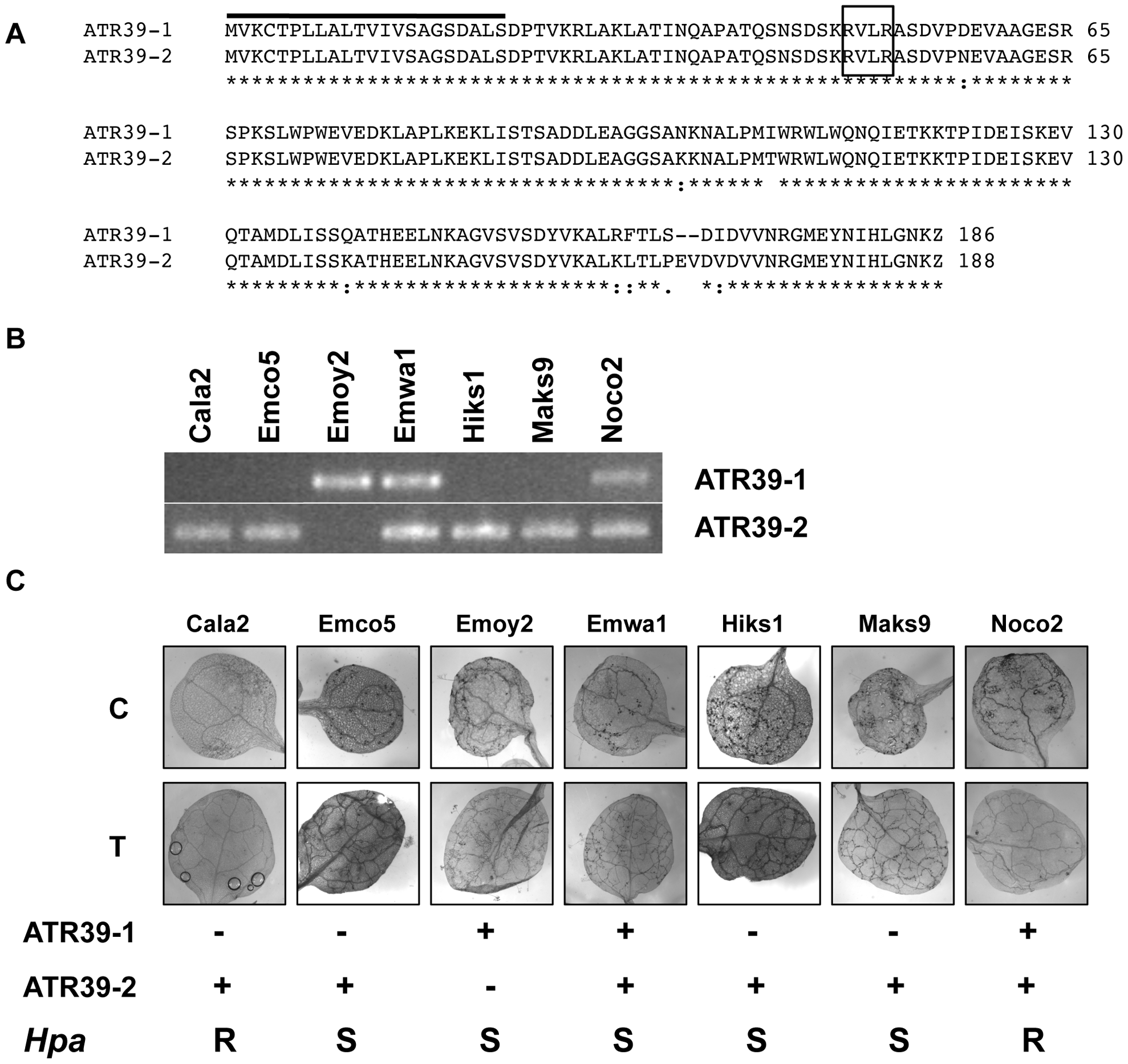 <i>ATR39</i> alleles are expressed in different <i>Hpa</i> isolates, but expression of <i>ATR39-1</i> does not correlate with avirulence on Wei-0.