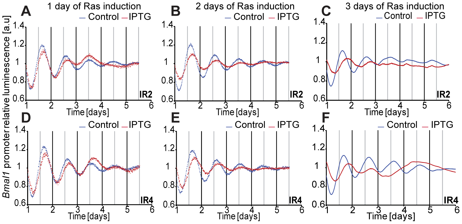 Induction of Ras expression in rat fibroblasts.