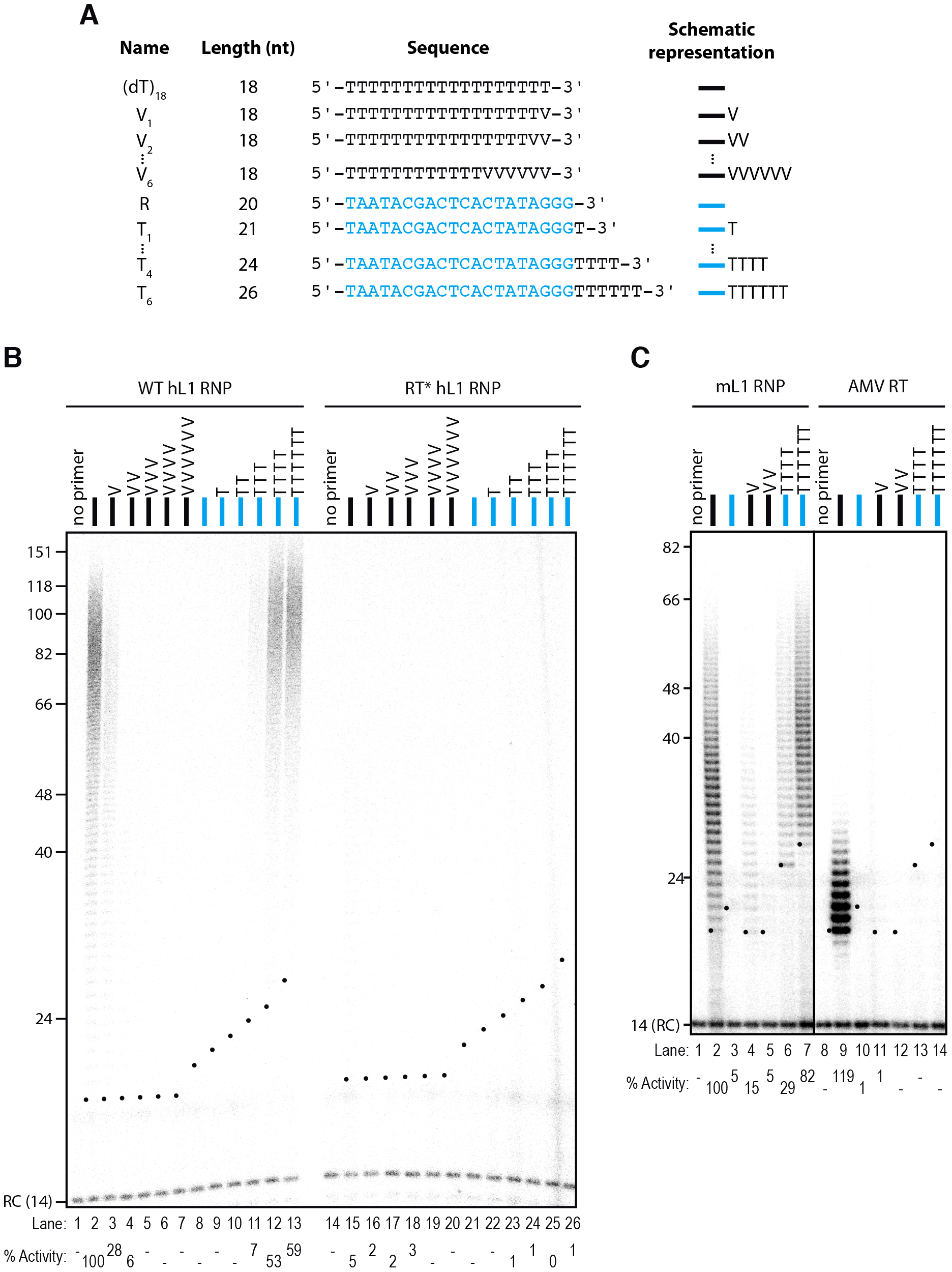 The L1 RNP preferentially extends primers ending with at least 4 Ts.