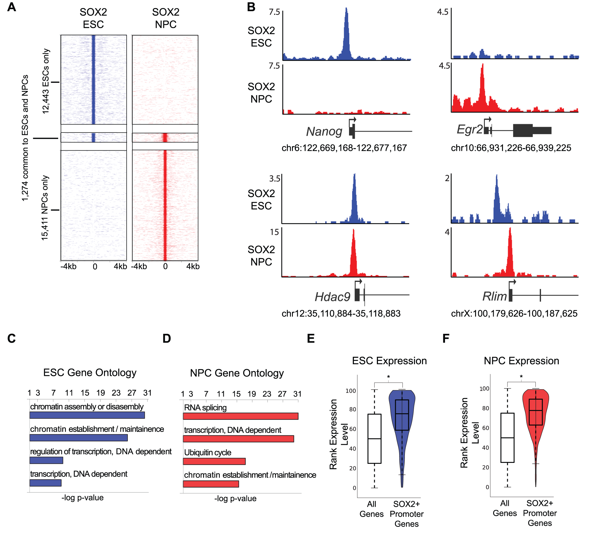 SOX2 binds promoters with cell-type-specific functions in ESCs and NPCs.