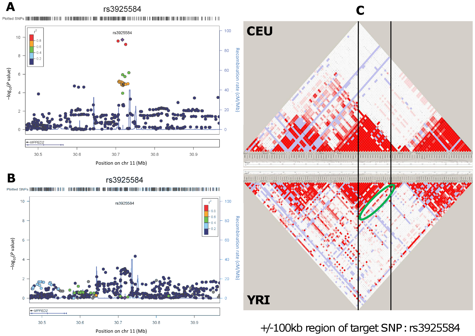 Genetic association and LD distribution of the <i>MPPED2</i> gene locus in European and African ancestry populations.