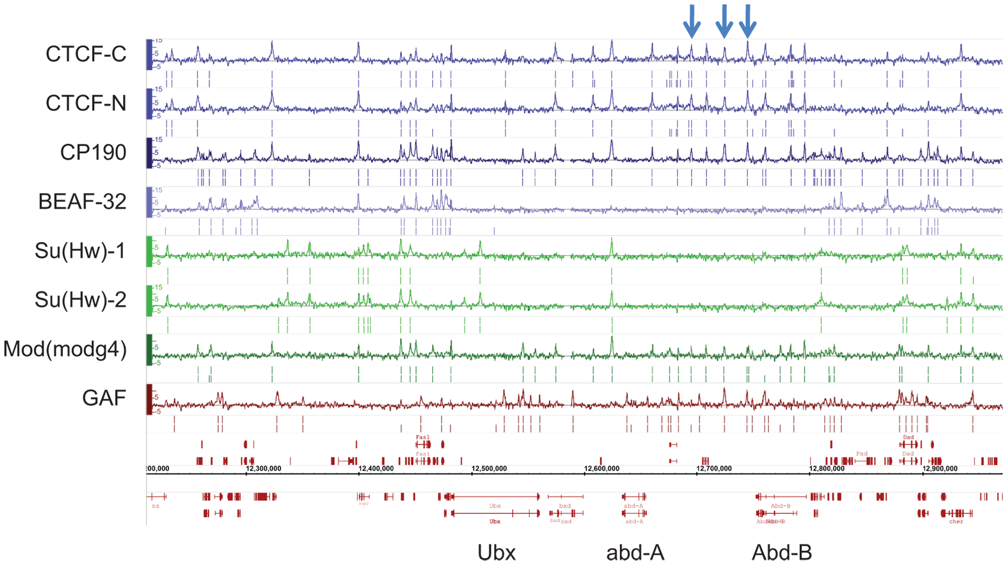 Binding profile of insulator-associated proteins in <i>Drosophila</i>.
