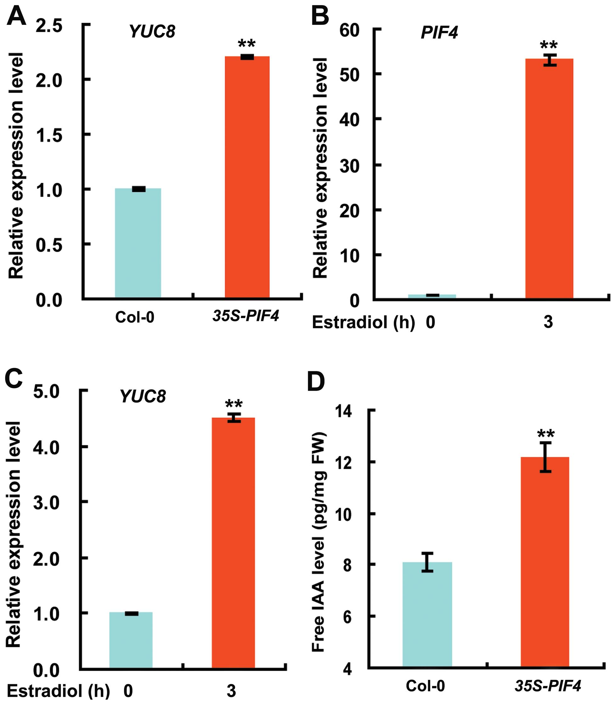 Overexpression of <i>PIF4</i> Increases the Expression of <i>YUC8</i> and Elevates Endogenous Free IAA Levels.