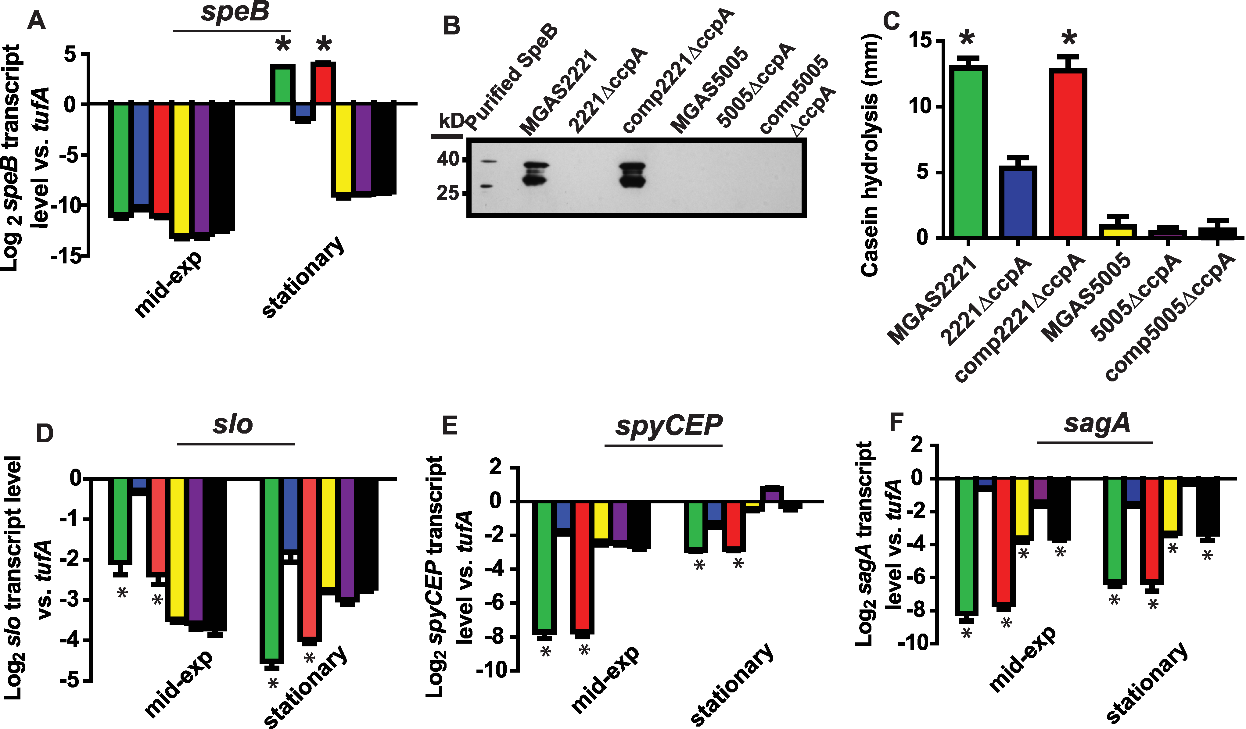Influence of CcpA on GAS virulence factors is dependent on strain CovRS status.