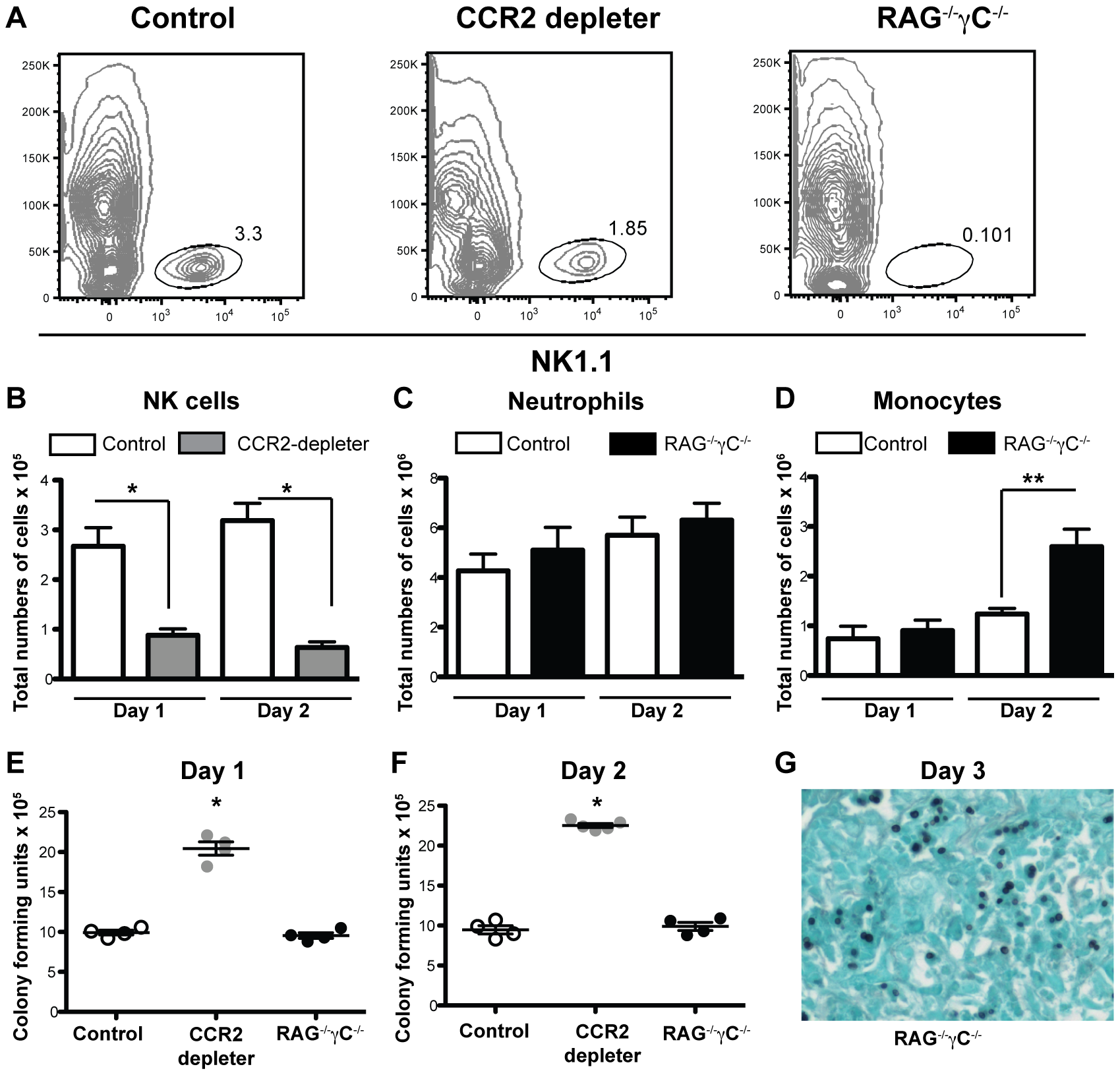 CCR2<sup>+</sup> NK cells and innate lymphocytes are dispensable for innate defense against IA.
