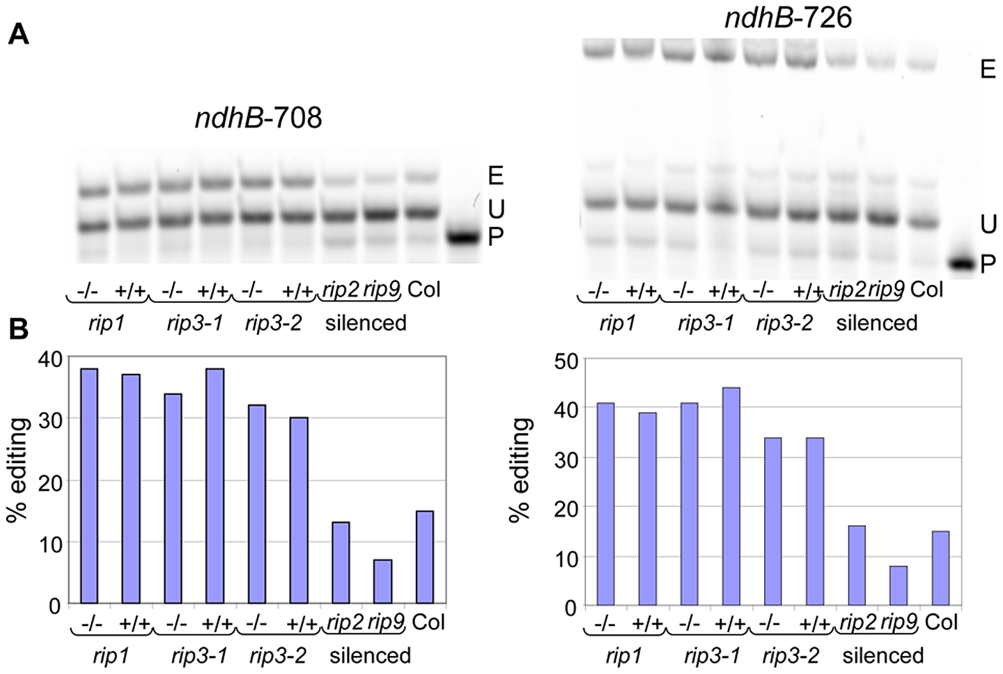 Validation by PPE of two plastid sites detected by RNA-seq.