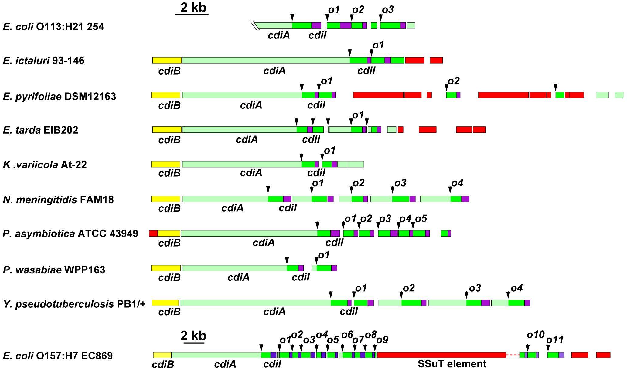 Many bacteria contain orphan <i>cdiA-CT/cdiI</i> modules.