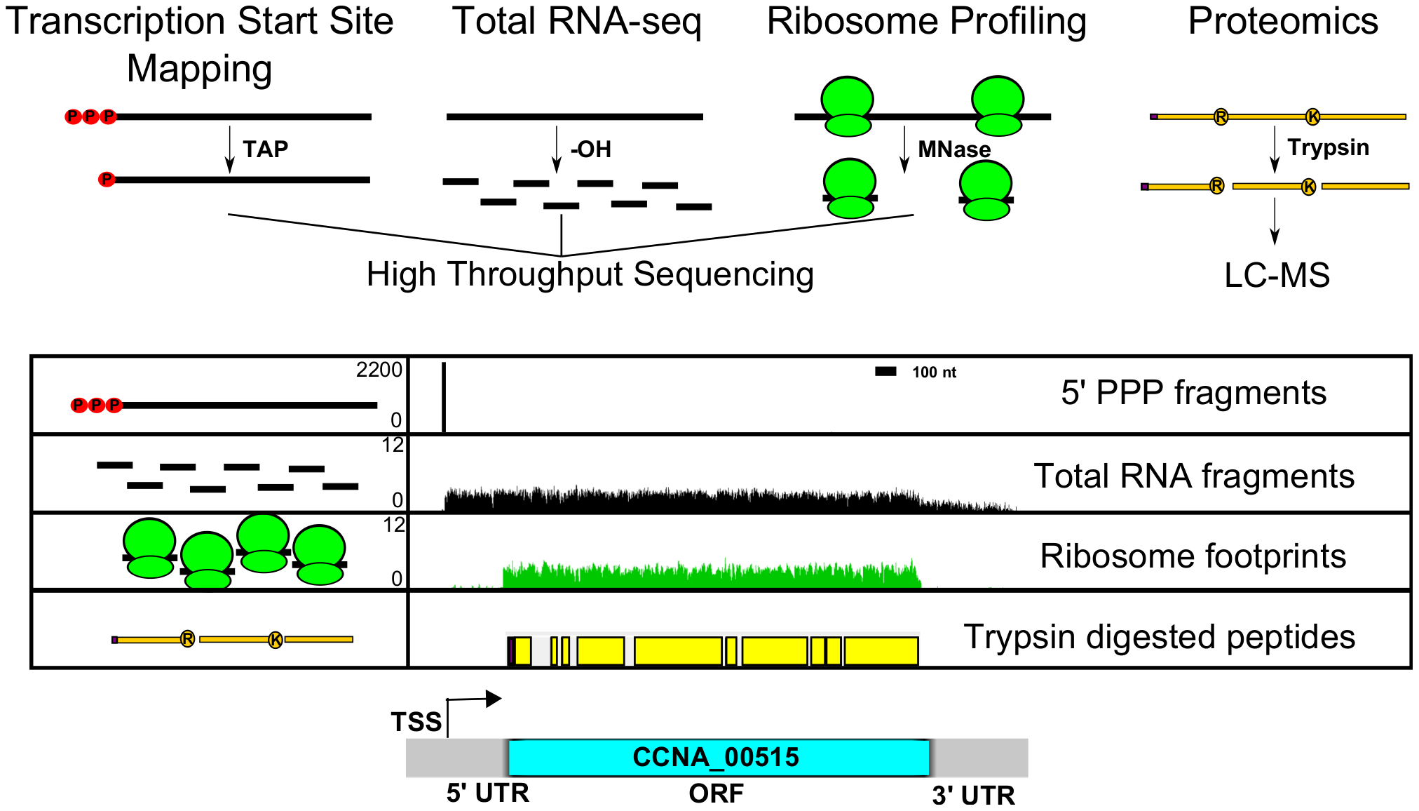Genome-wide data set integration to map the genetic elements in the <i>C. crescentus</i> genome.