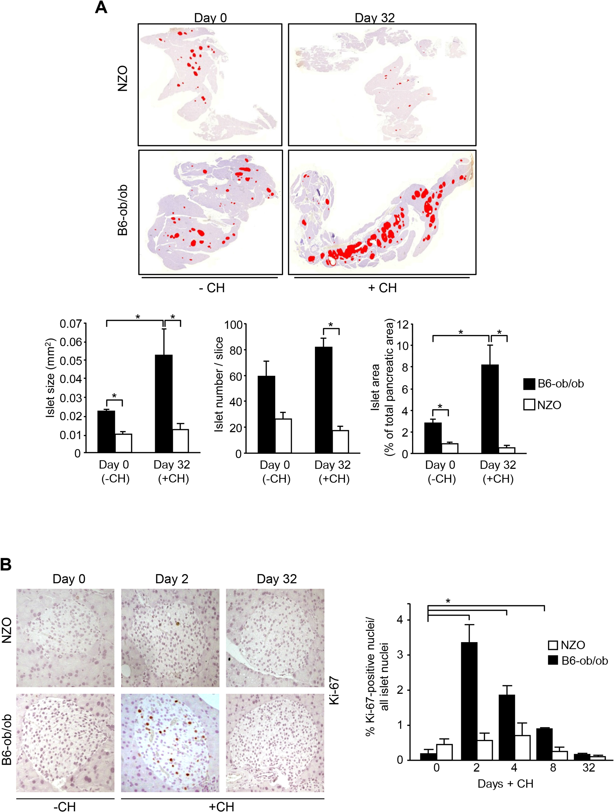 Diabetes resistance of B6-ob/ob mice is conferred by an adaptive islet hyperplasia.