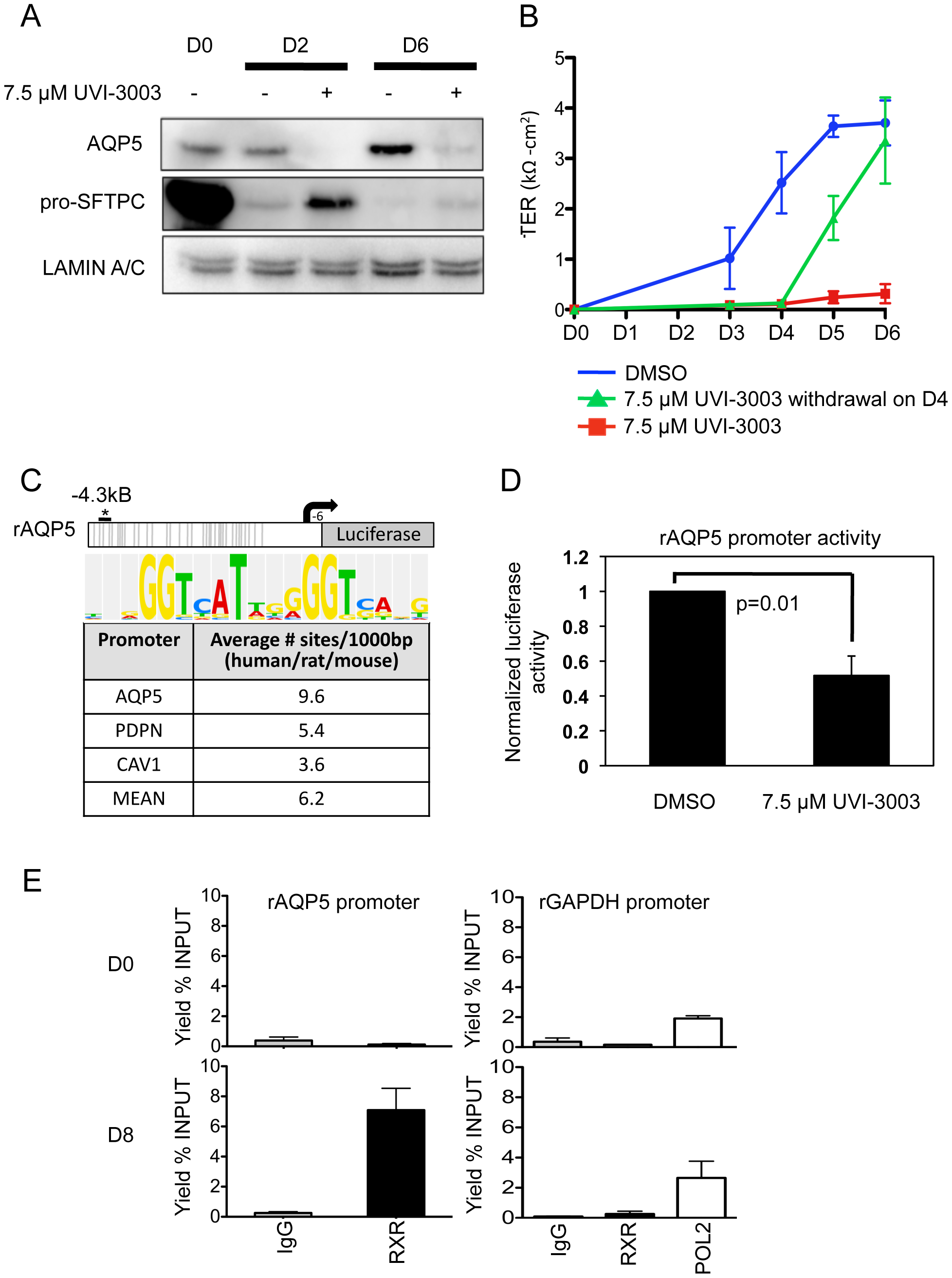 Functional validation of a transcription factor signaling pathway predicted from bioinformatics analysis.