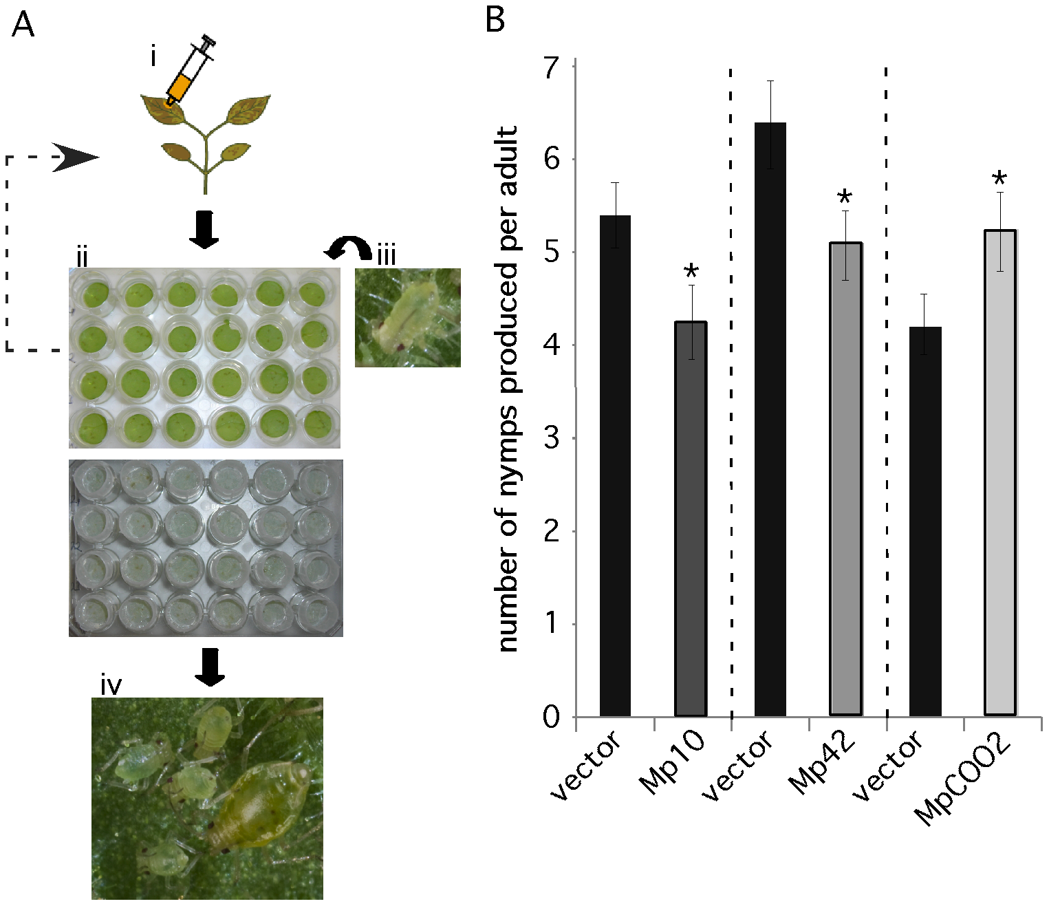 A medium-throughput leaf disc-based assay identifies <i>M. persicae</i> effector candidates that affect aphid performance.