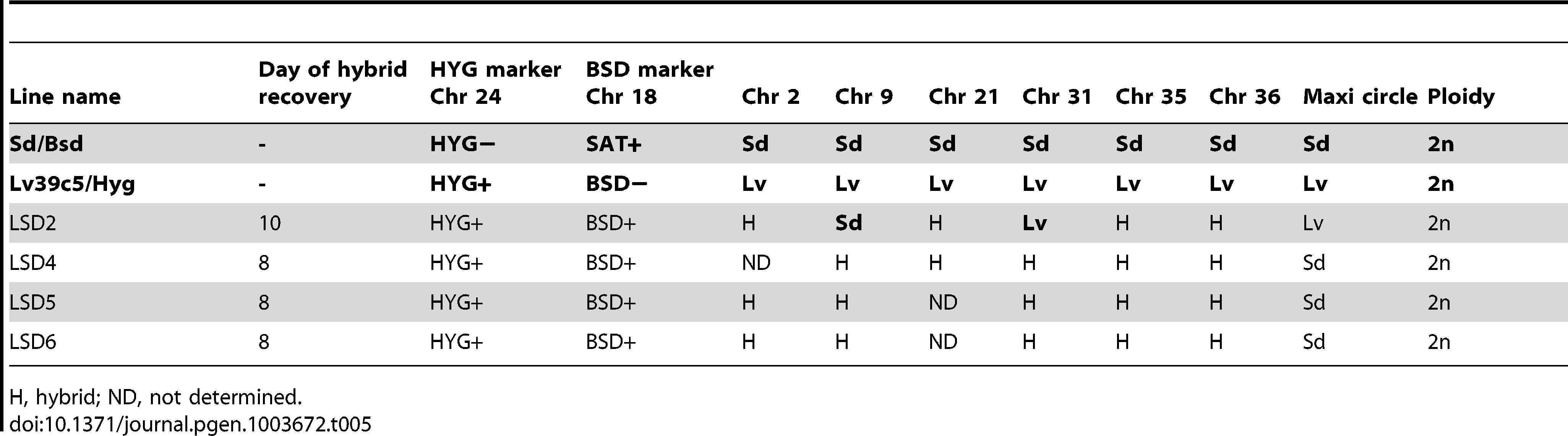 Summary of Sd/Bsd×LV39c5/Hyg hybrid genotypes generated in <i>P. duboscqi</i>.