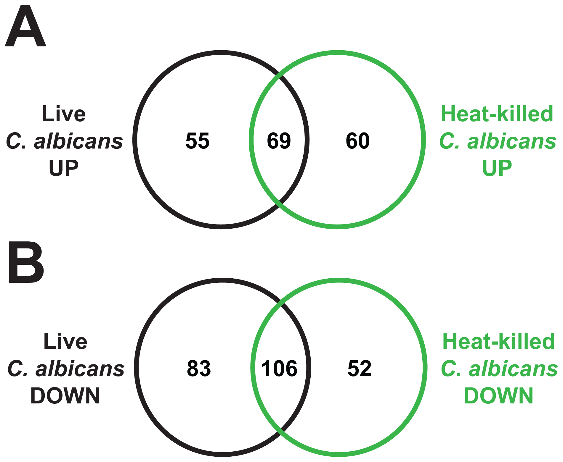Heat-killed <i>C. albicans</i> yeast cells elicit a transcriptional response in <i>C. elegans</i> that overlaps with the response to live <i>C. albicans</i>.