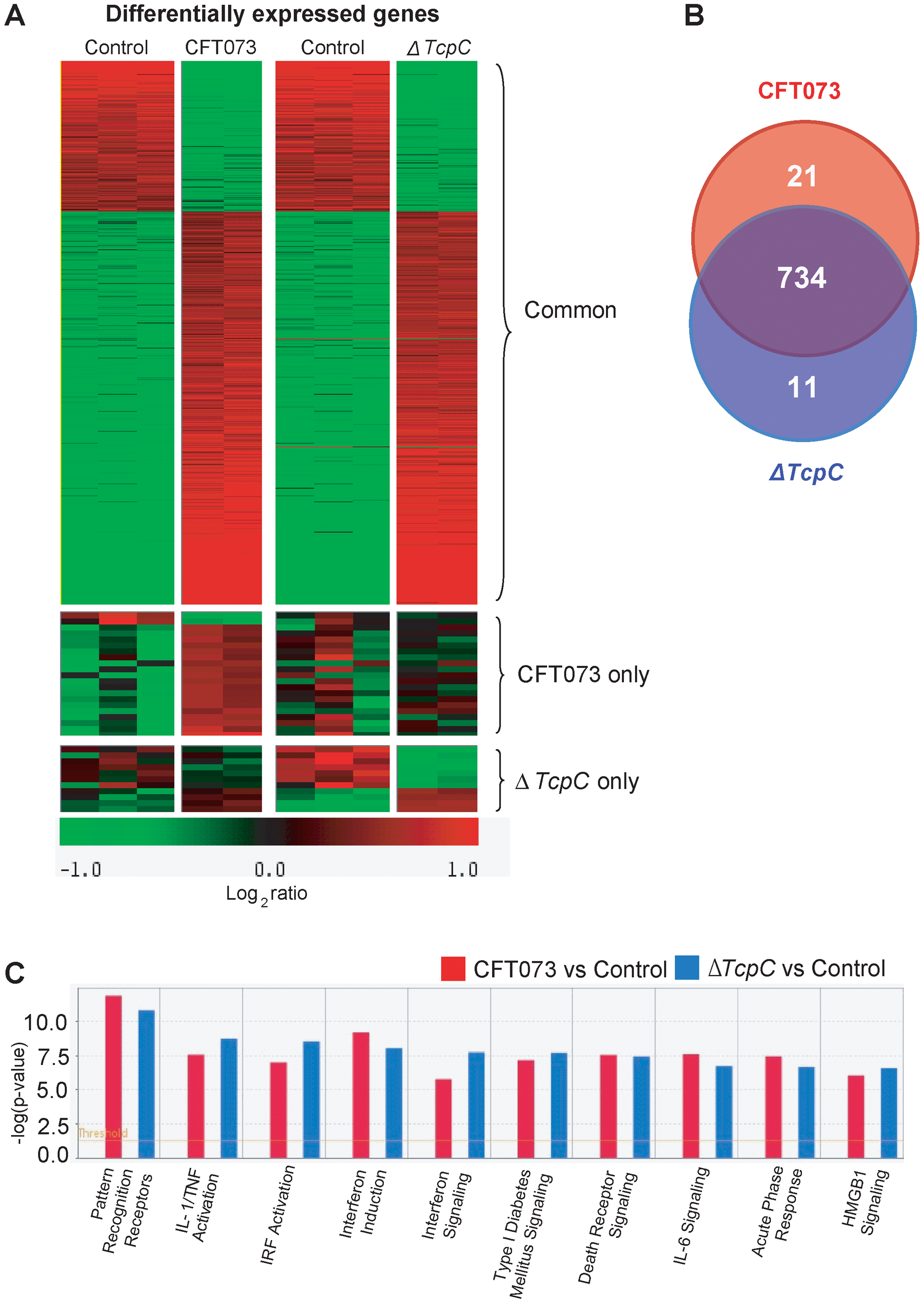 Uroepithelial gene expression in response to <i>in vitro</i> infection with CFT073 or <i>ΔTcpC</i>.