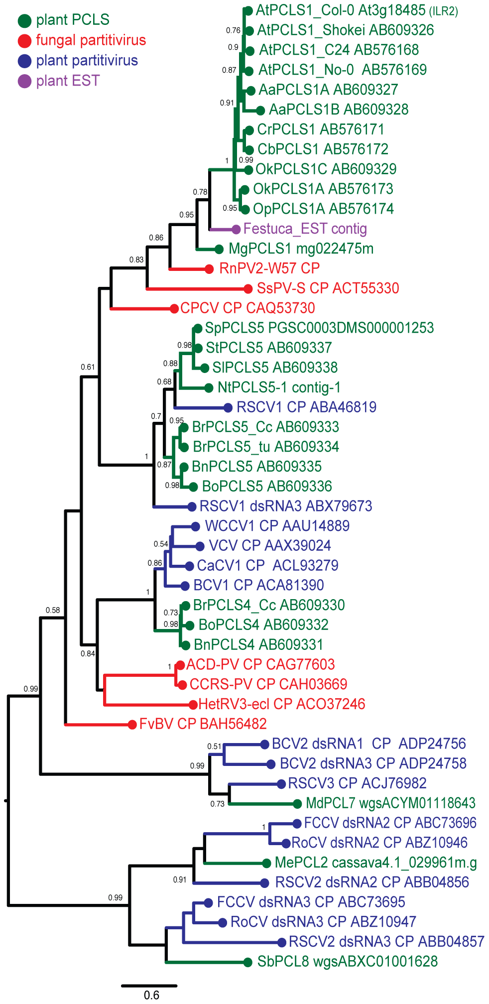 Molecular phylogenetic analysis of partitivirus CPs and plant PCLSs.