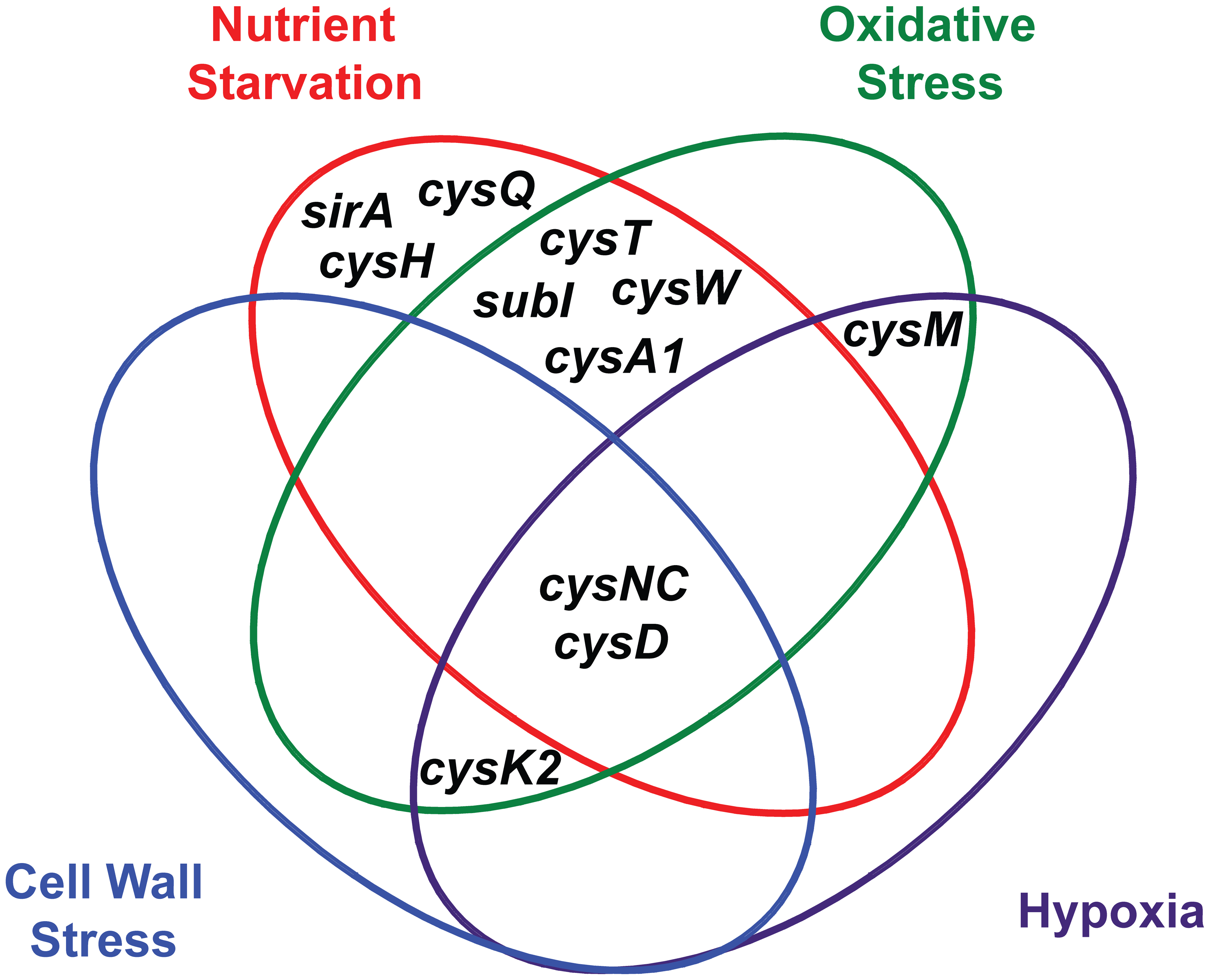 Venn diagram illustrating the convergent transcriptional regulation of <i>Mtb</i> sulfur metabolism genes by various conditions of environmental stress.