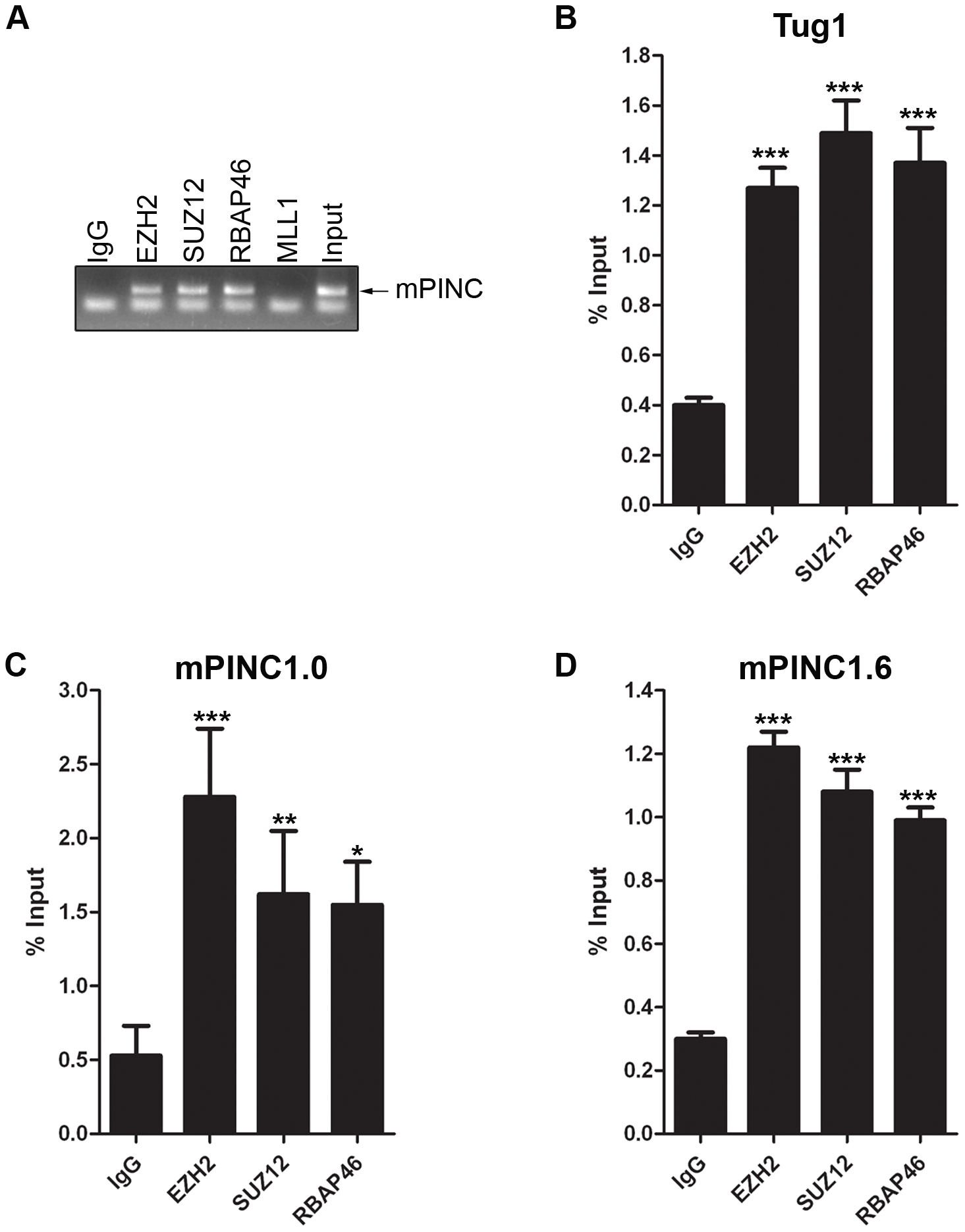 <i>mPINC</i> interacts with PRC2 in HC11 cells.