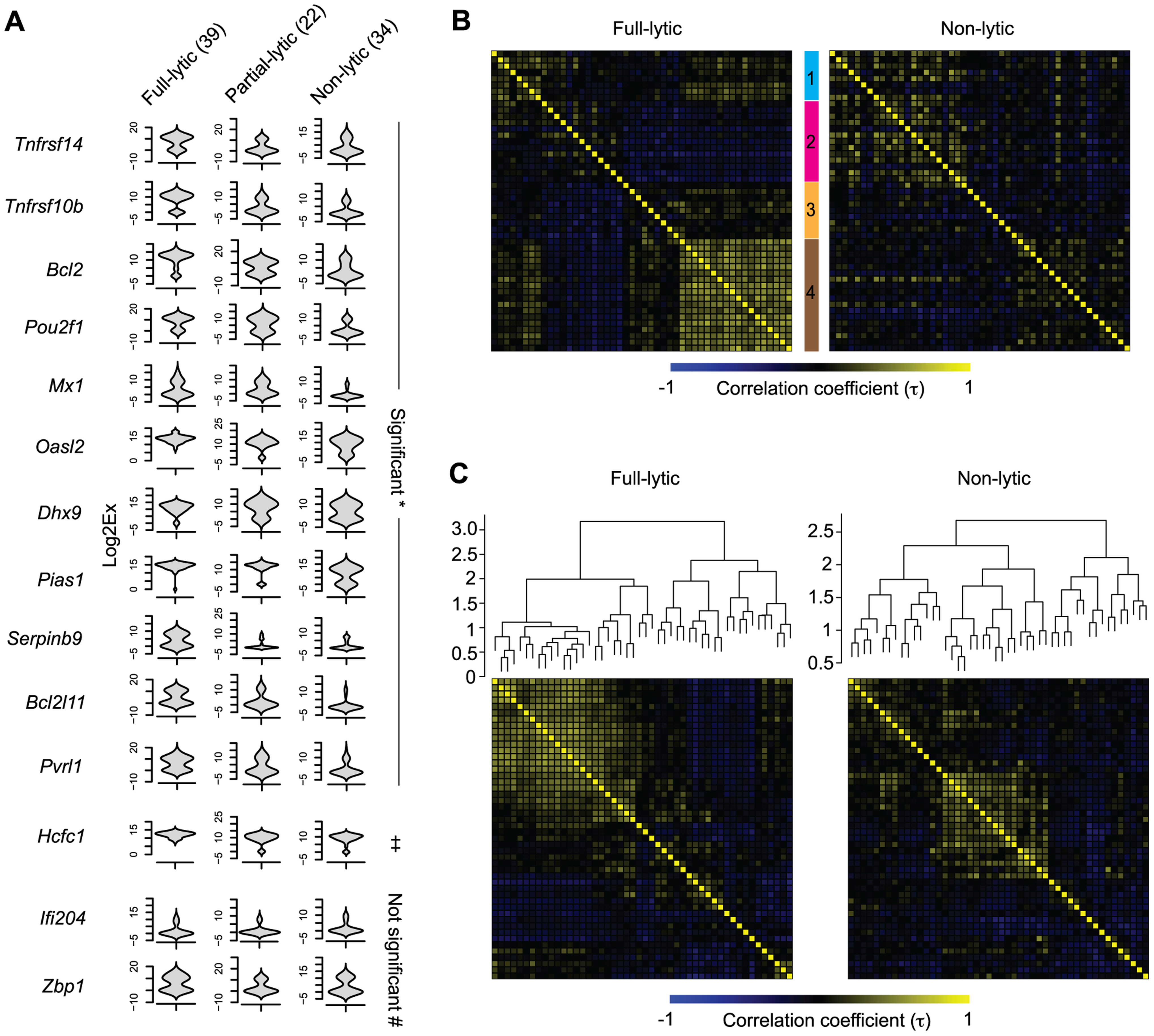 Increasing viral activity is matched by progressive host neuronal transcriptional response.