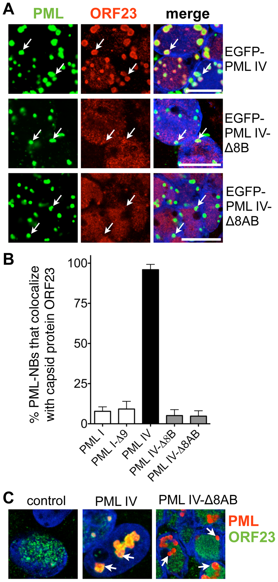 Sequestration of ORF23 capsid protein requires the C-terminal domain of PML IV.
