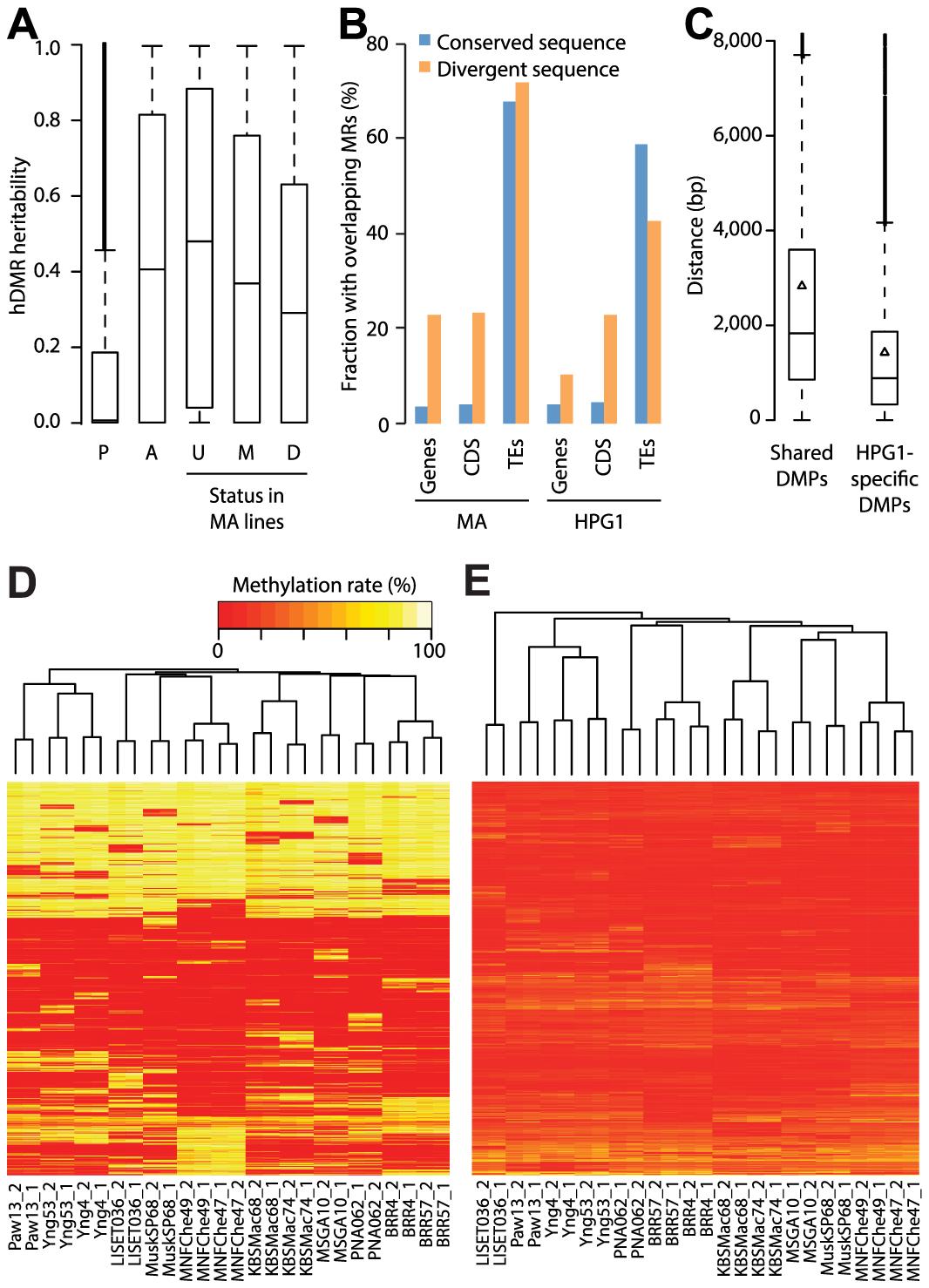 Genetic effects on epigenetic variation.